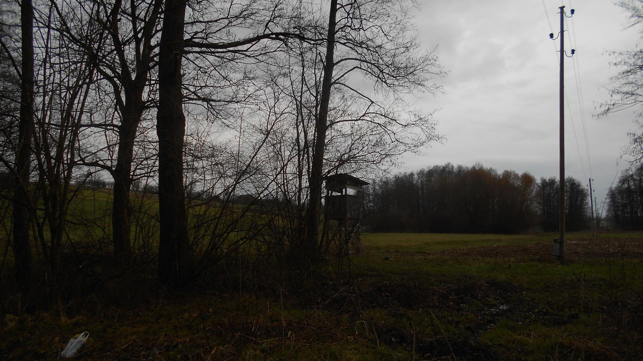 Na rubu šume-čeka! by Mary13