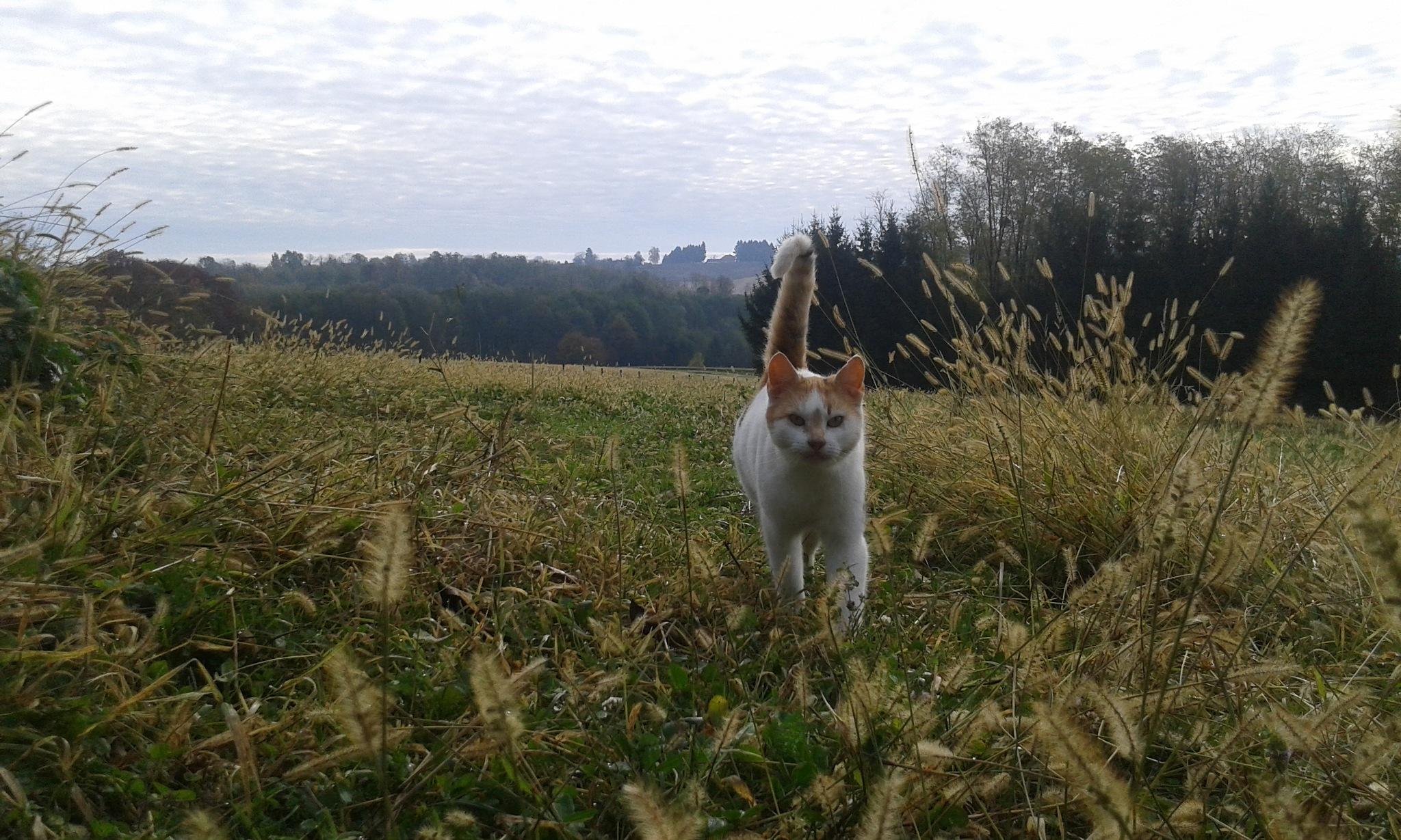 Mačak u krupnom planu by Mary13