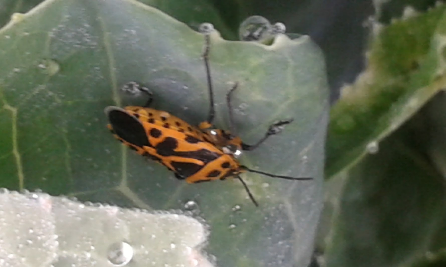 Insekt by Marica Svigir