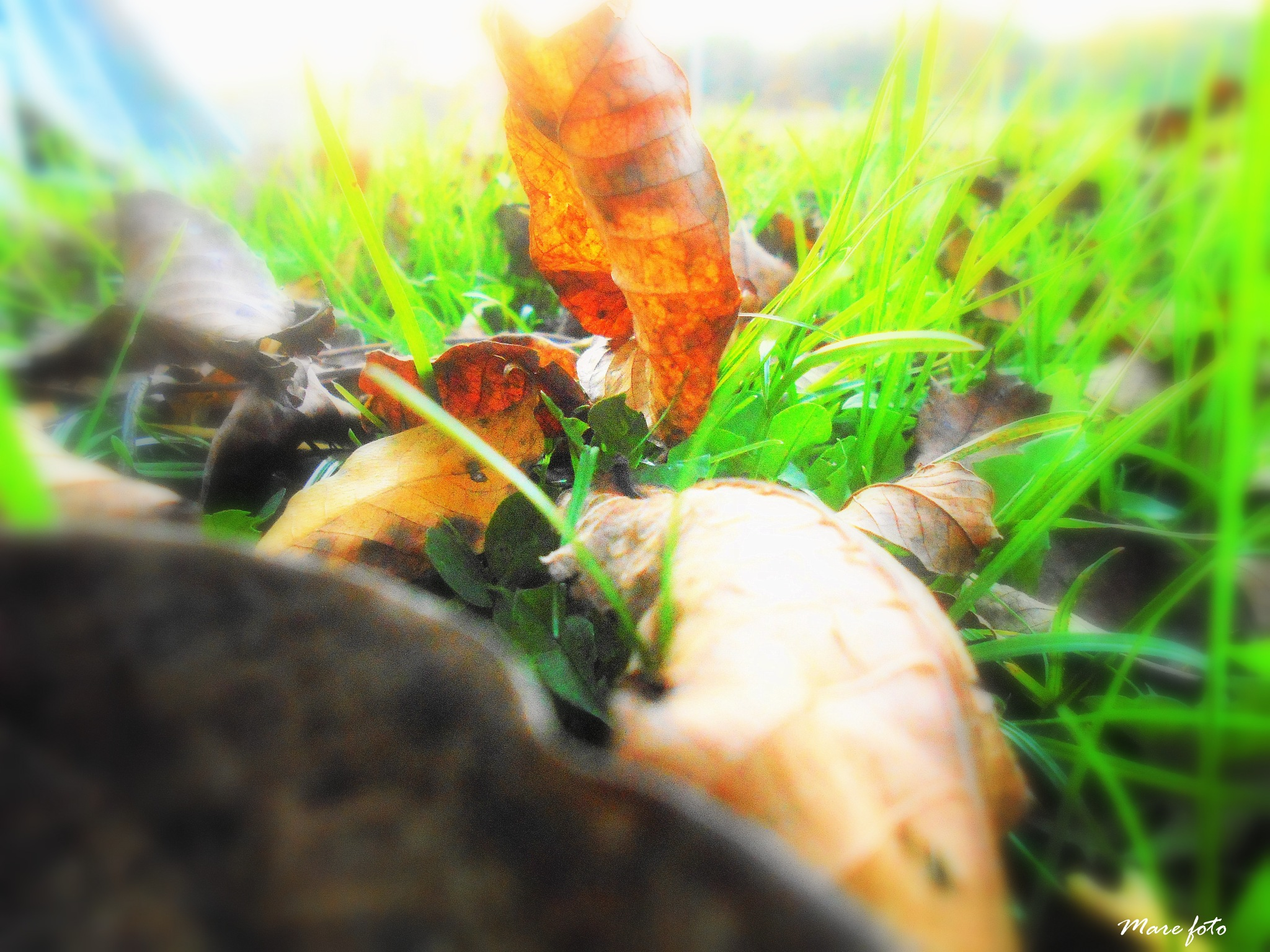 Jesen by Mary13