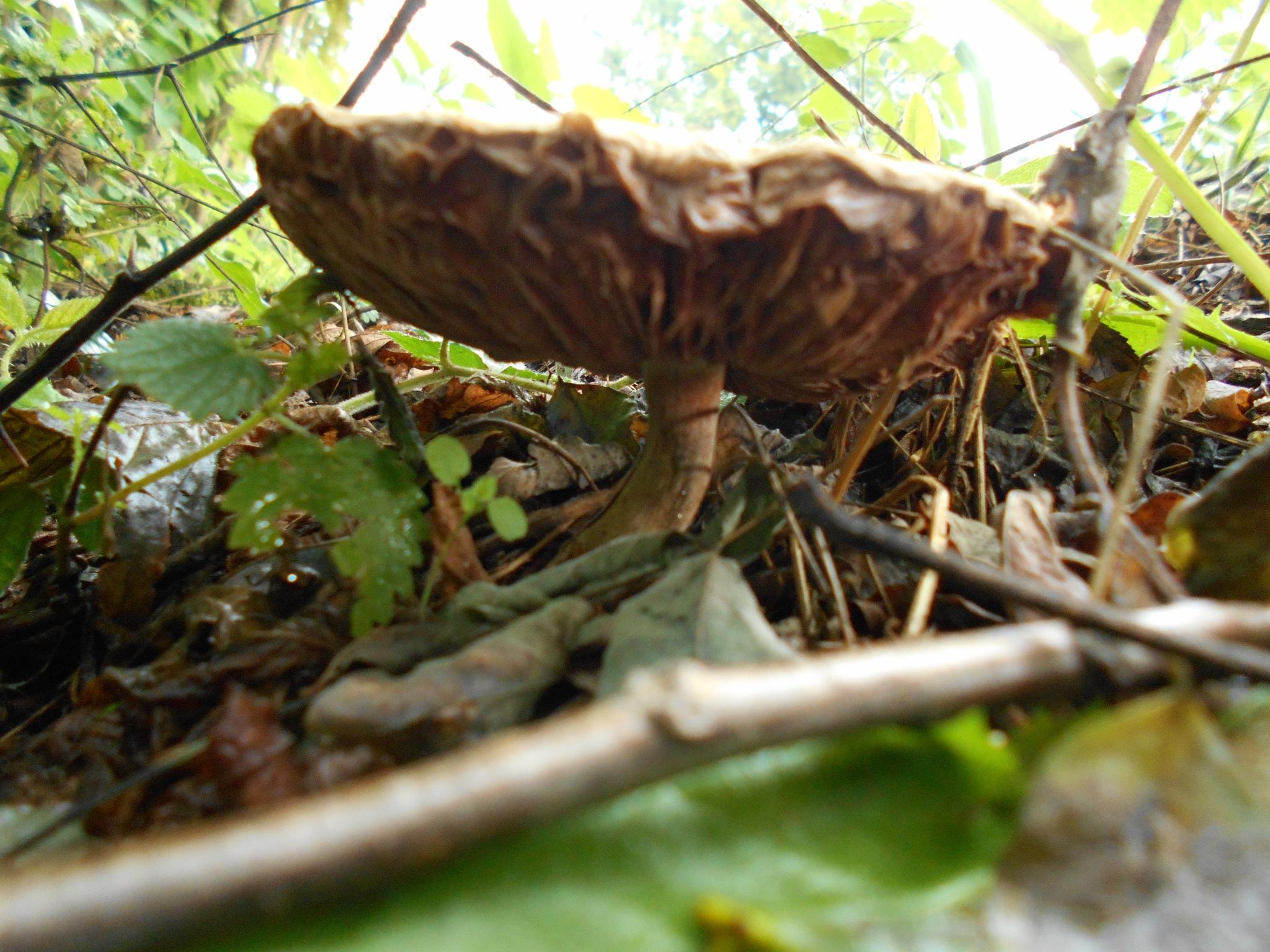 Gljive poslije kiše by Mary13