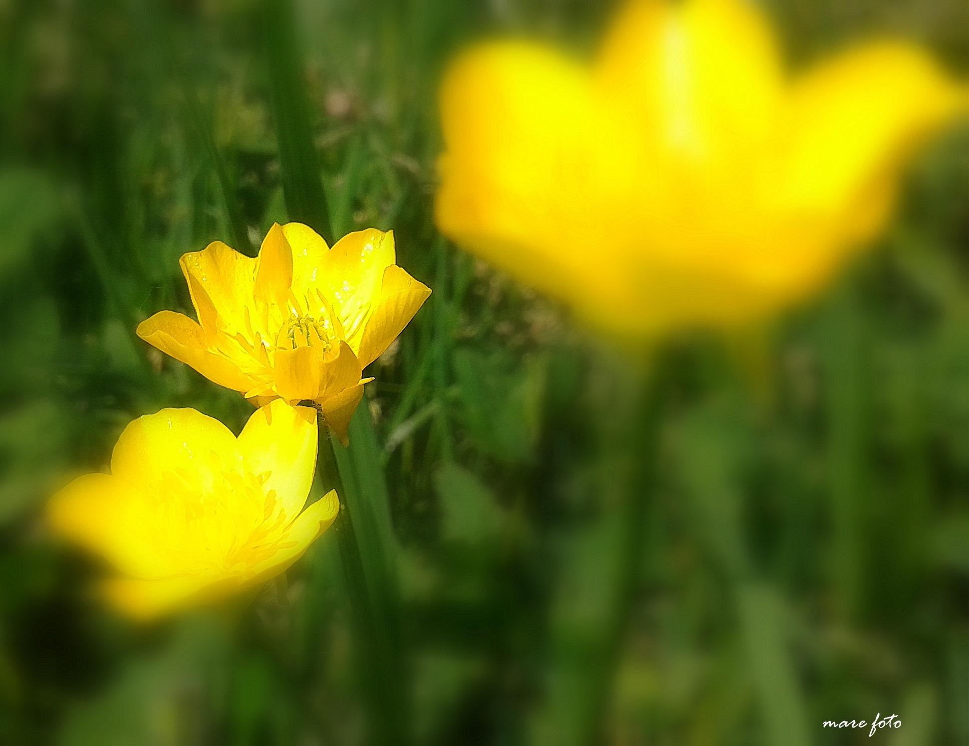 Žuto-zeleno..!! by Mare