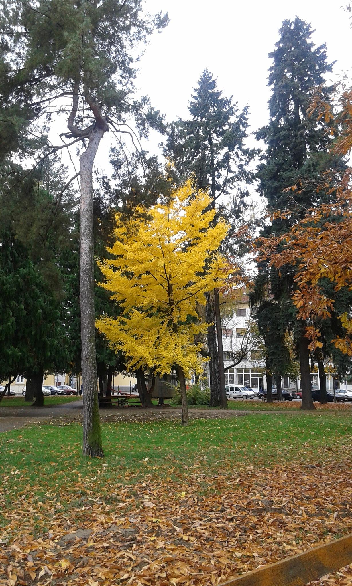 Žuta jesen by Mary13