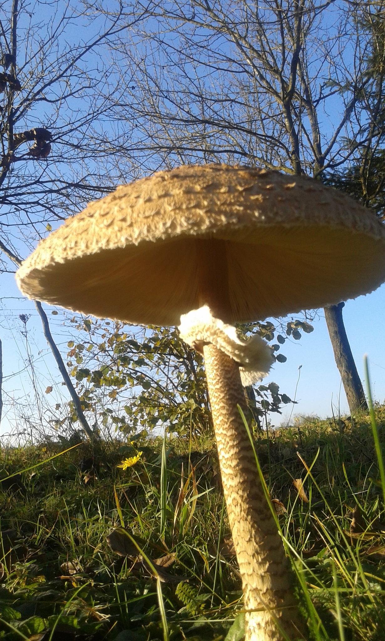 Gljiva...jesen...cvijet by Mary13