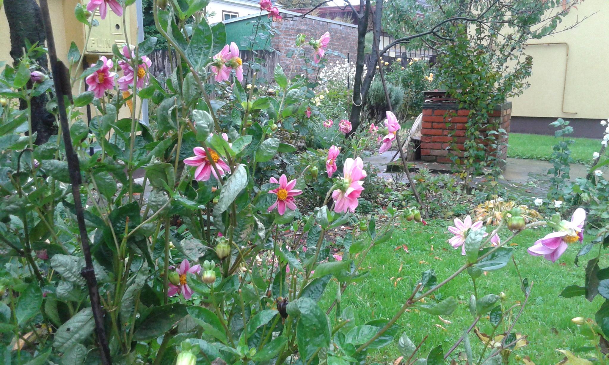 Šarenilo cvijeća by Mary13