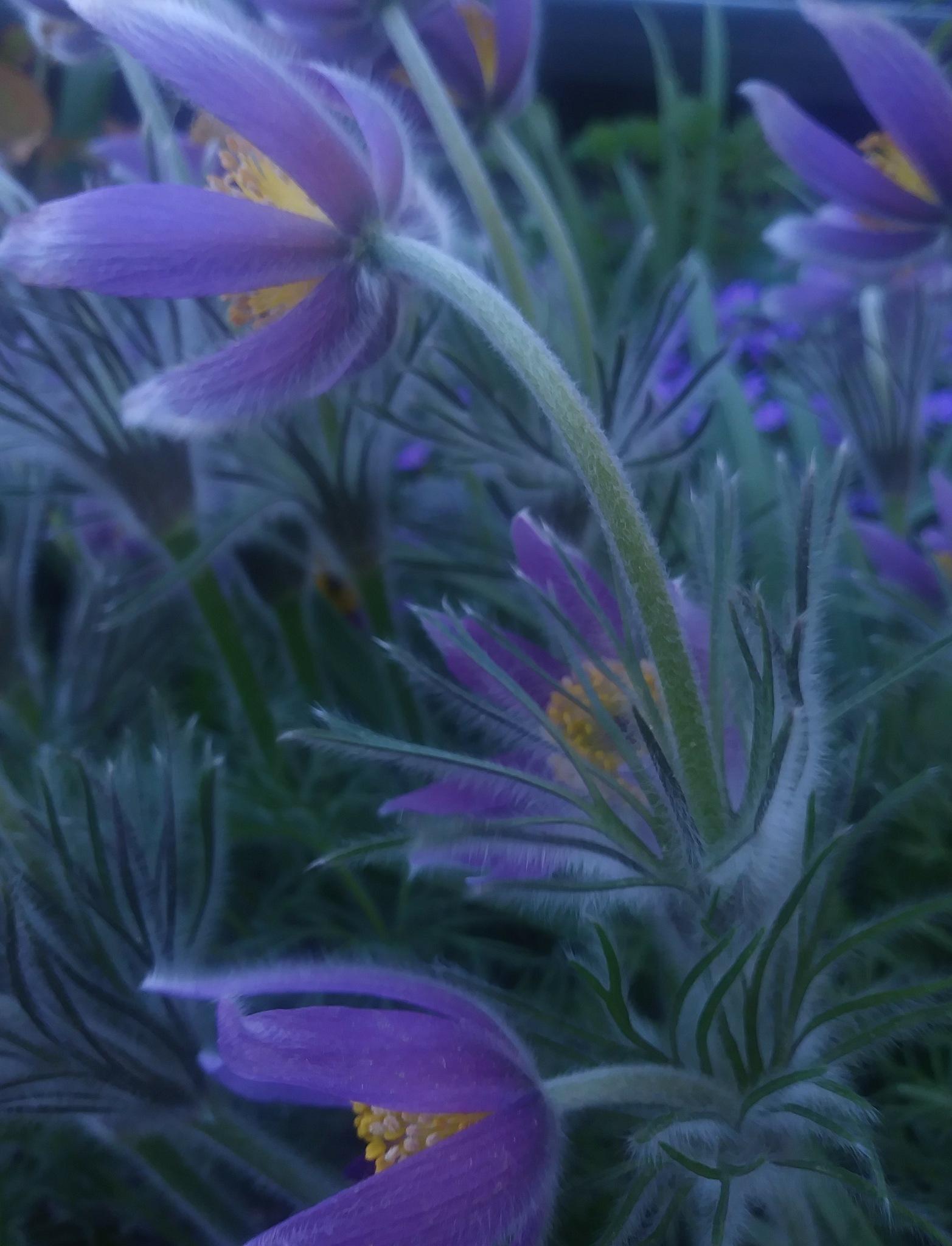 Bezimeni cvijet by Mare