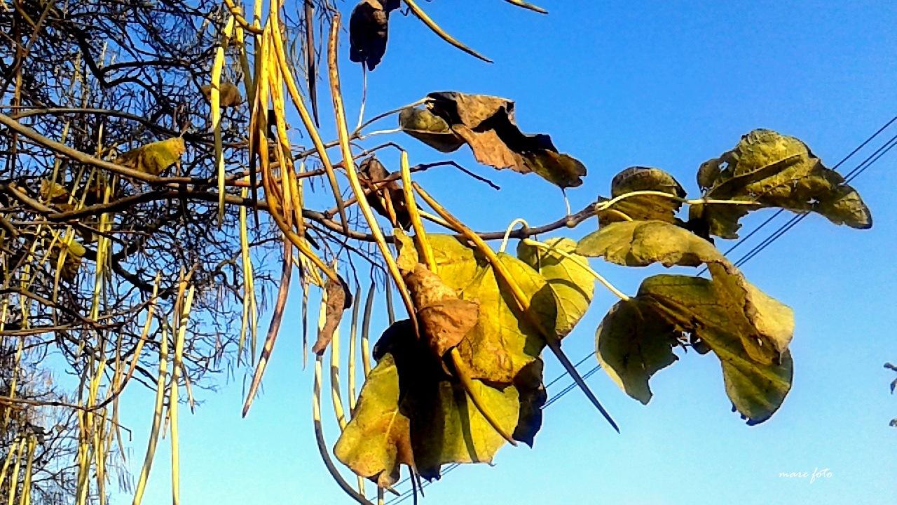 Žuto jesenje lišće i plodovi by Mary13