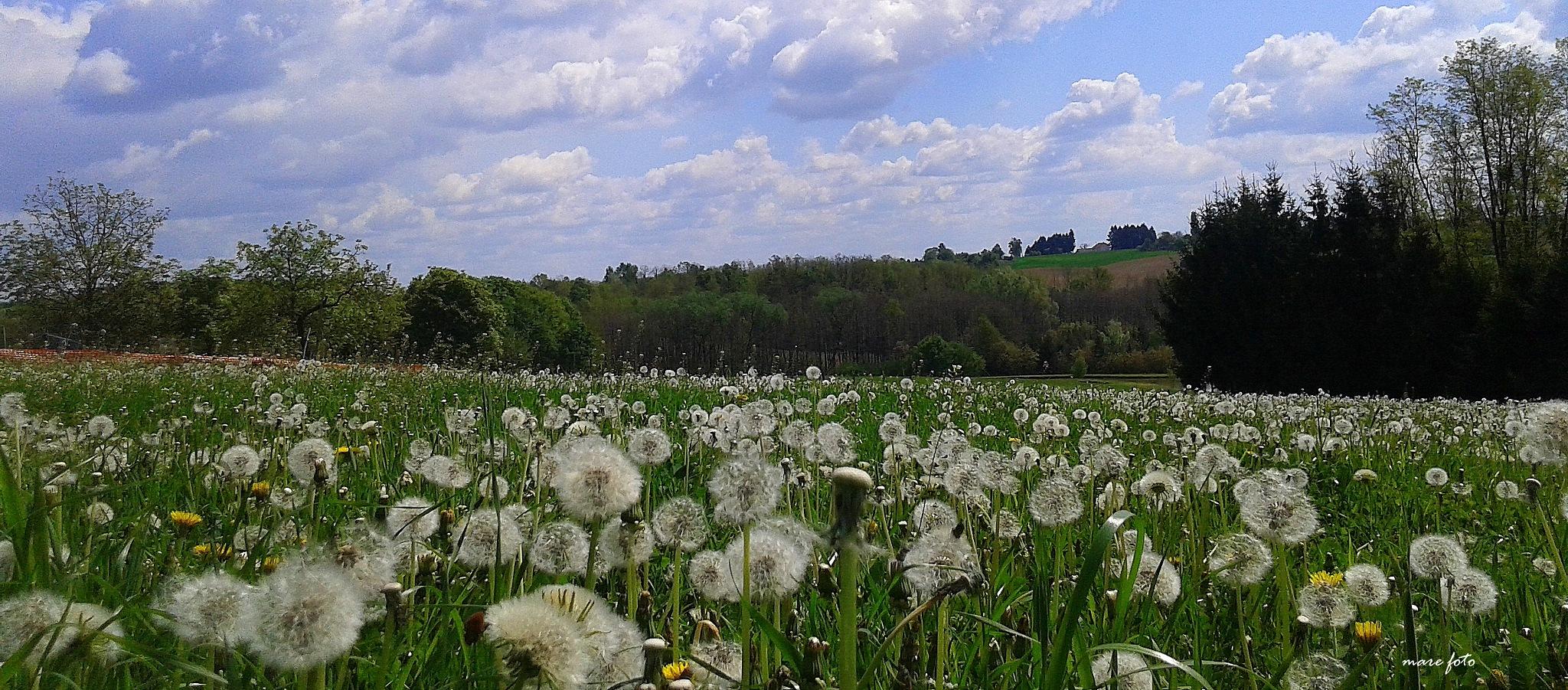 Panorama.............maslačaka i oblaka!! by Mare