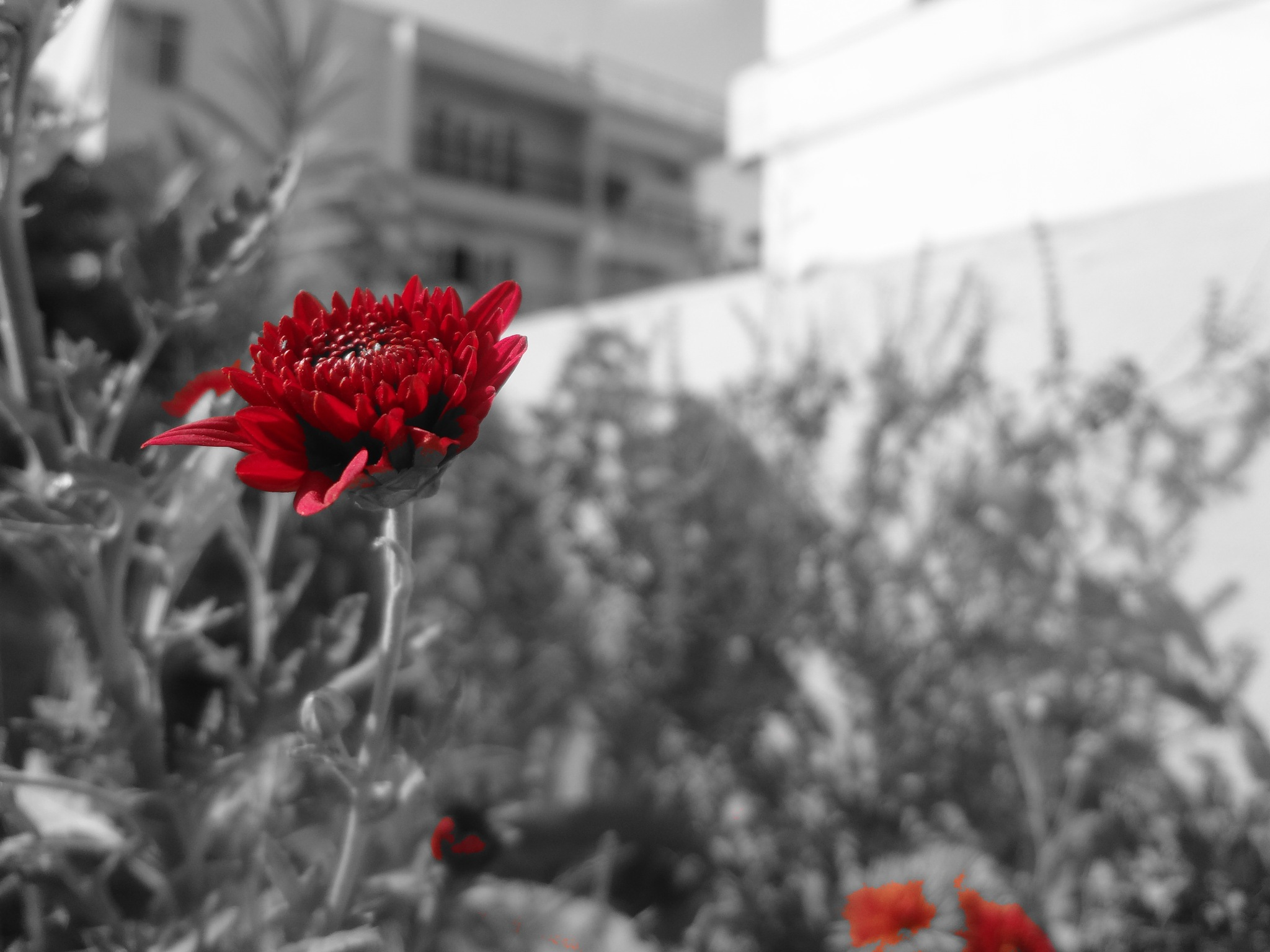 selective color photography by pjagadish