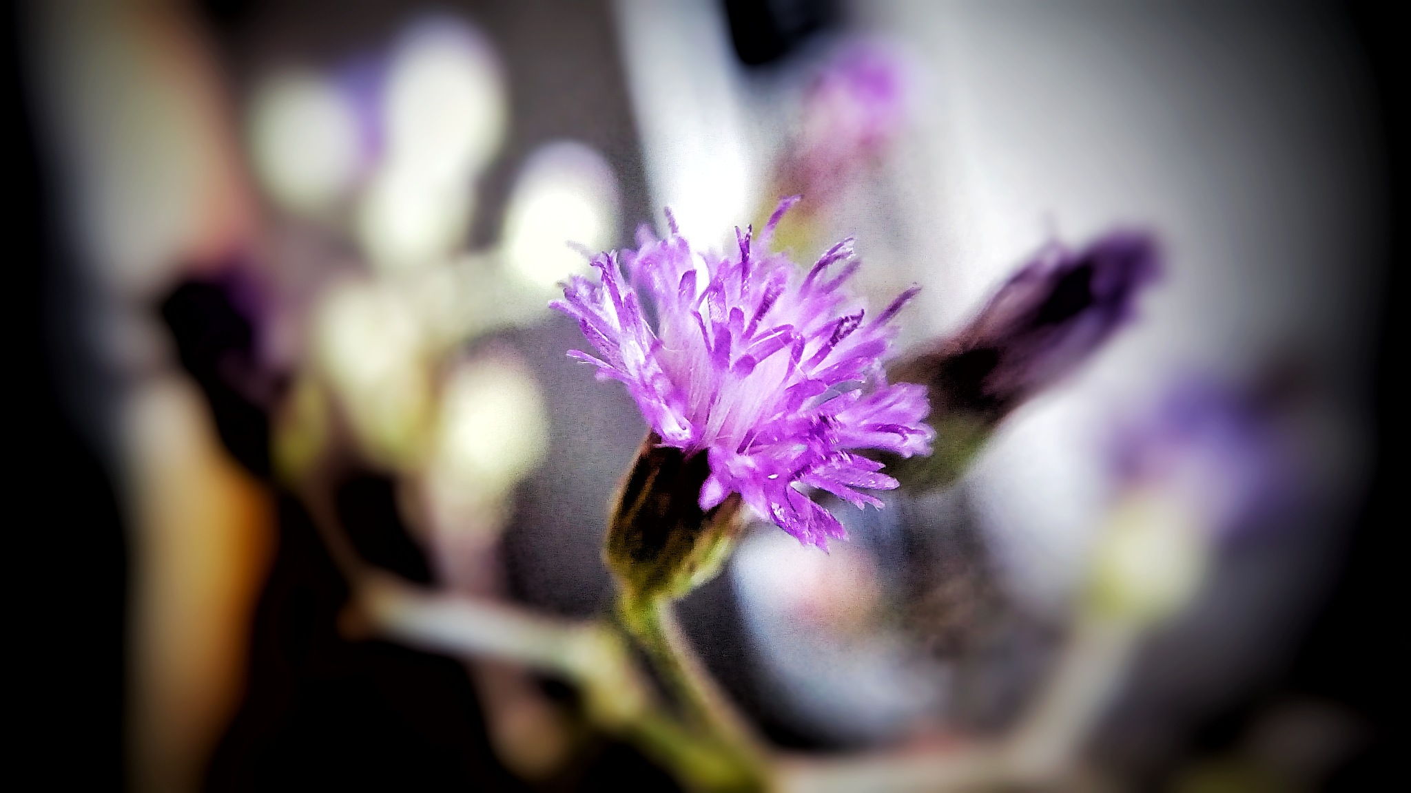Macro Purple by pjagadish