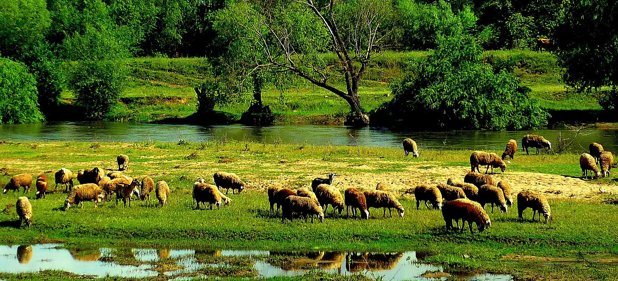 Maritsa river, near Plovdiv city, Bulgaria by StefanTodorov