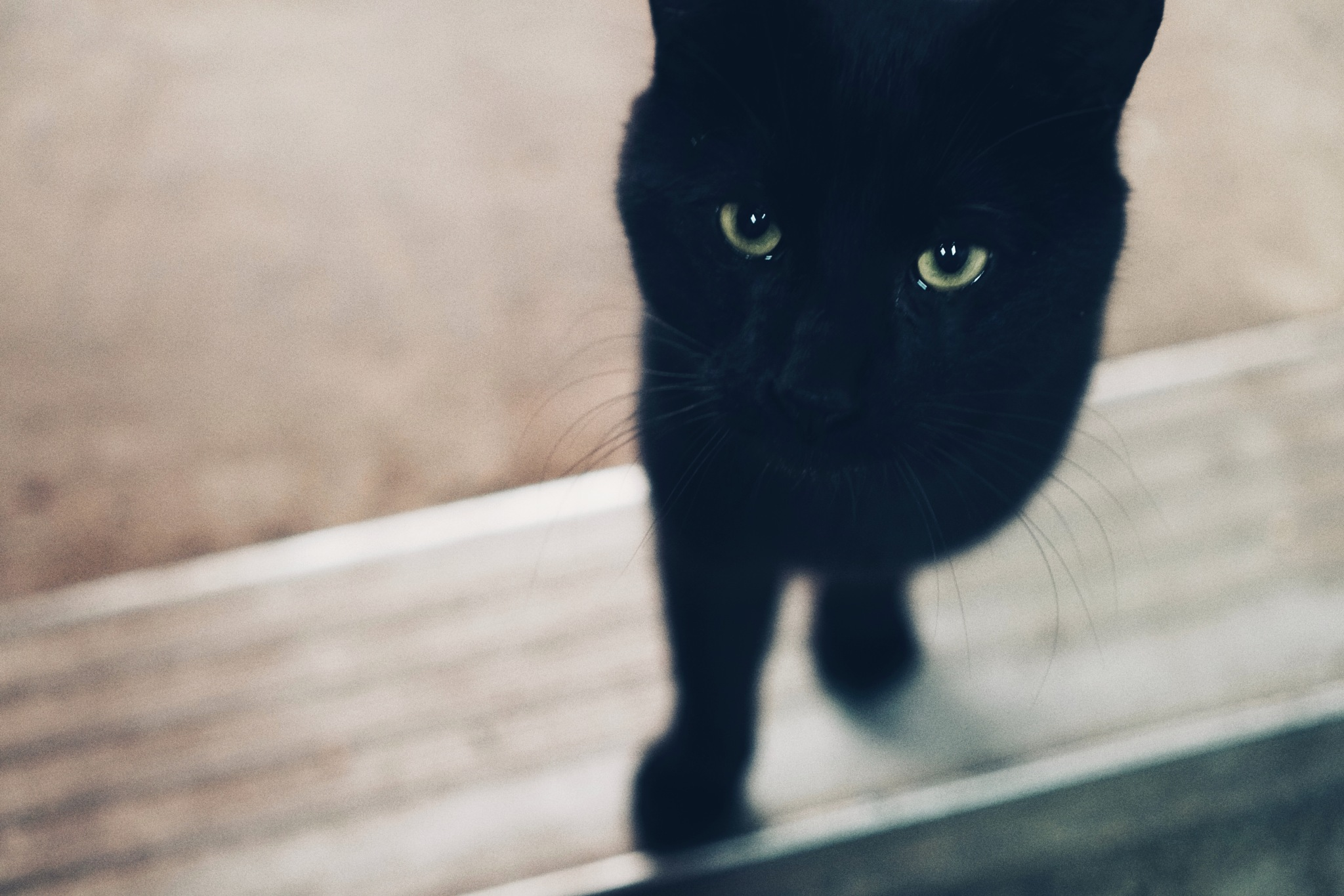 Halloween cat by GCGirl