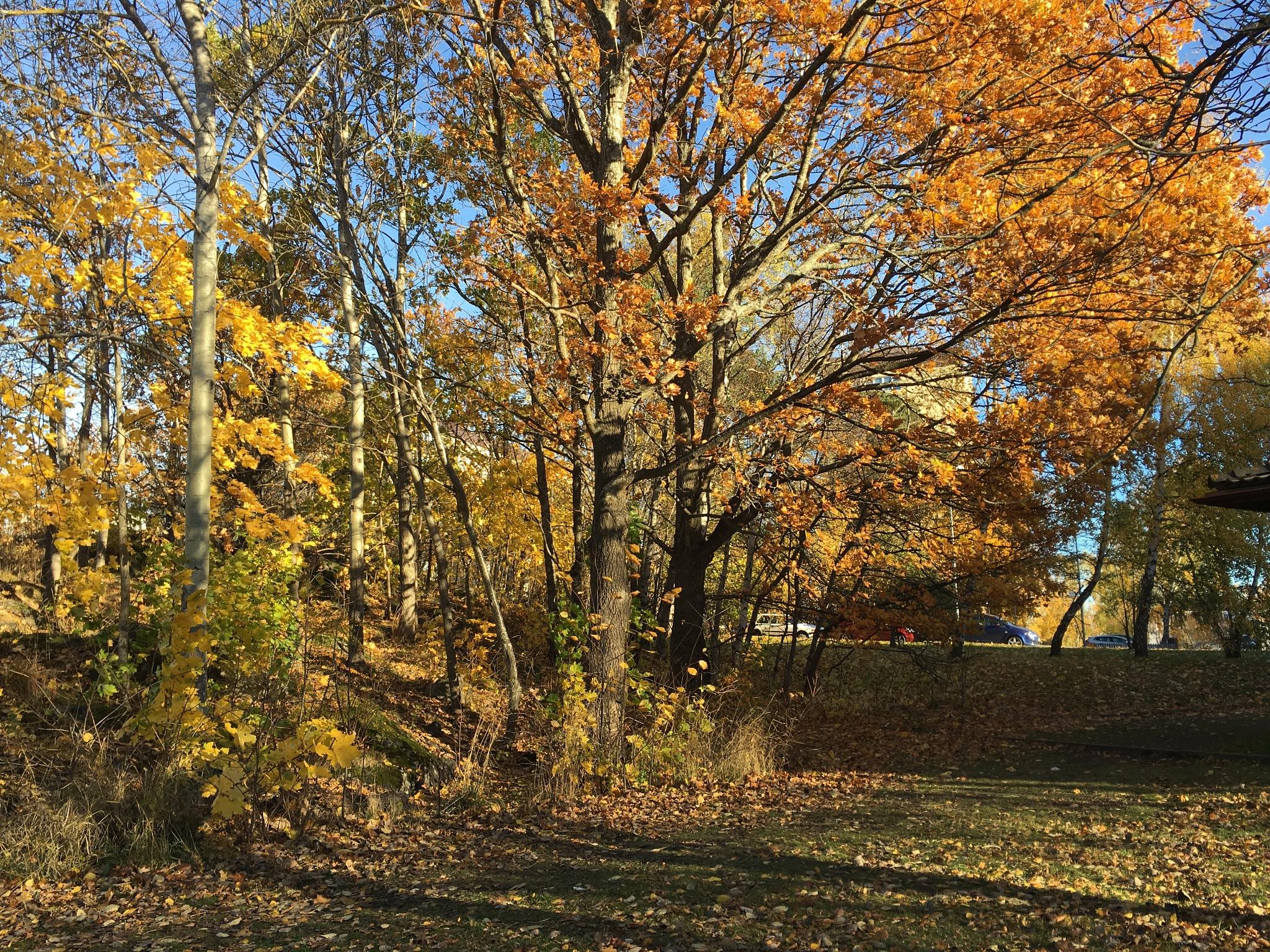 Colored fall  by GodaMinnen