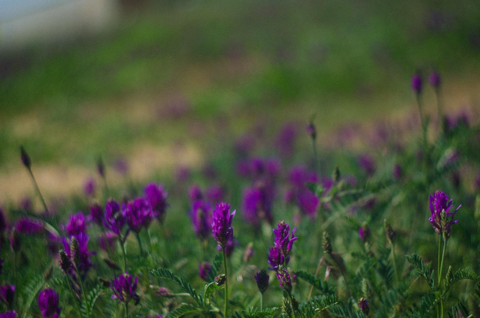 Purple beauty by Beata Obscura