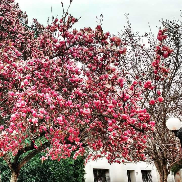 invierno florecido by Rodrigo Patricio Montoya Flores