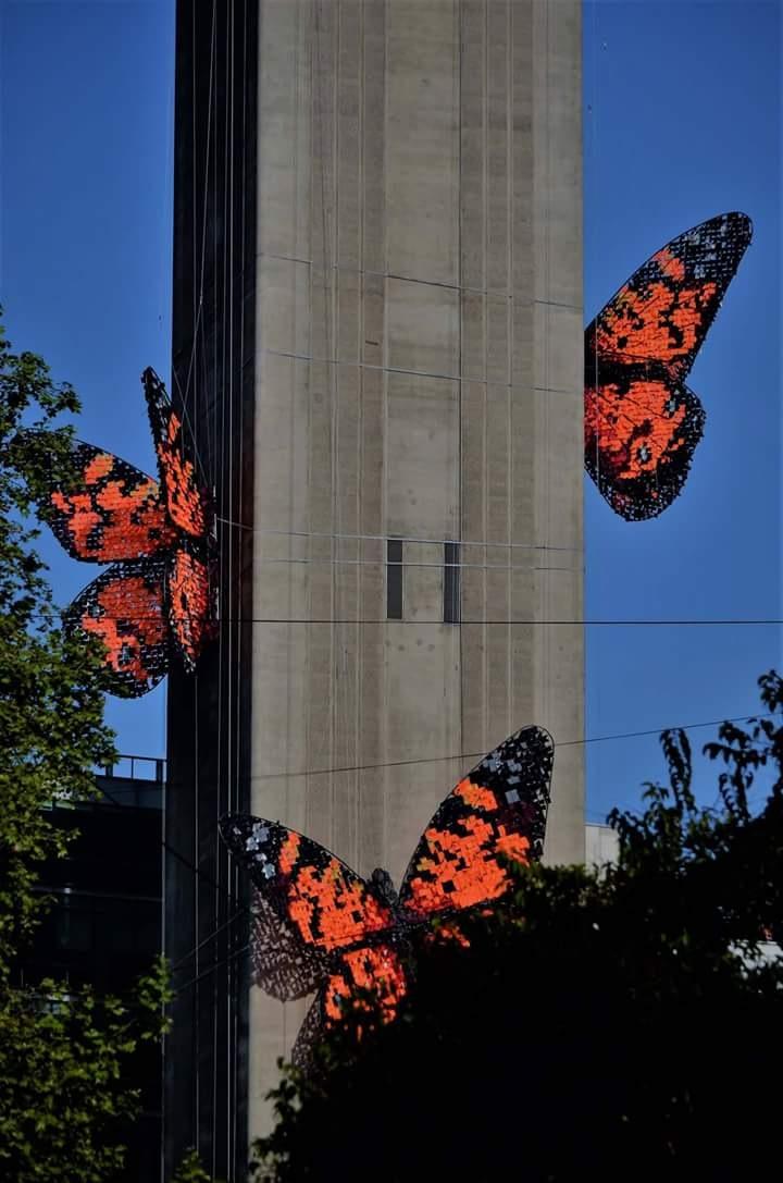mariposas en el aire by Rodrigo Patricio Montoya Flores