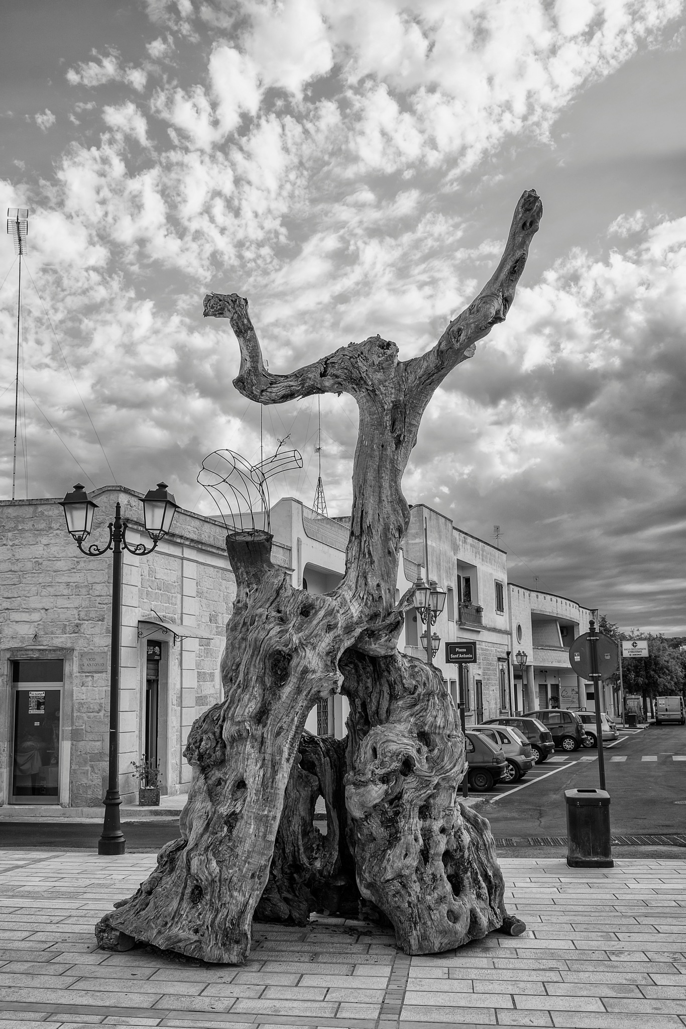 I WAS AN OLIVE TREE by Alessandro Errico