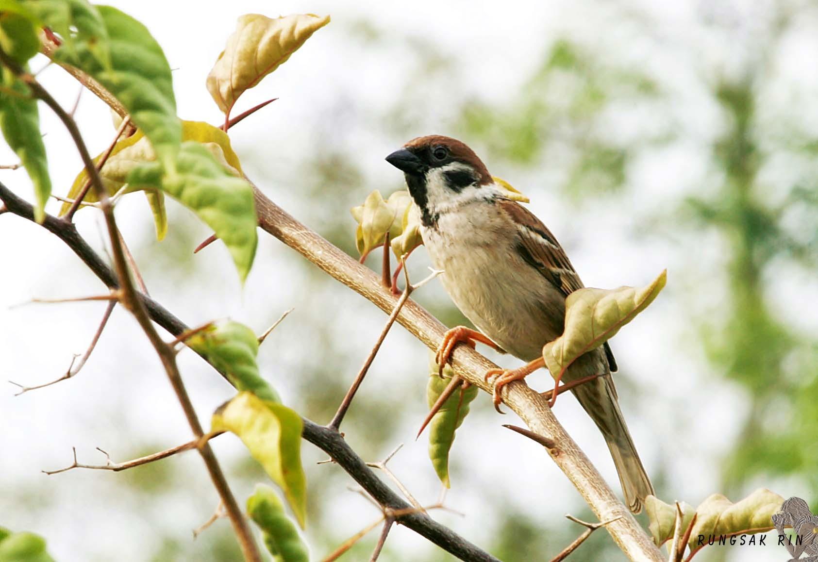 Bird by Rungsak Rintharasri