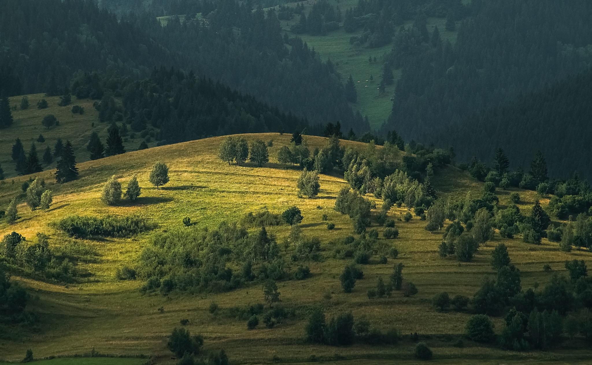 Twilight on the hill-Open it by csillagosveny77