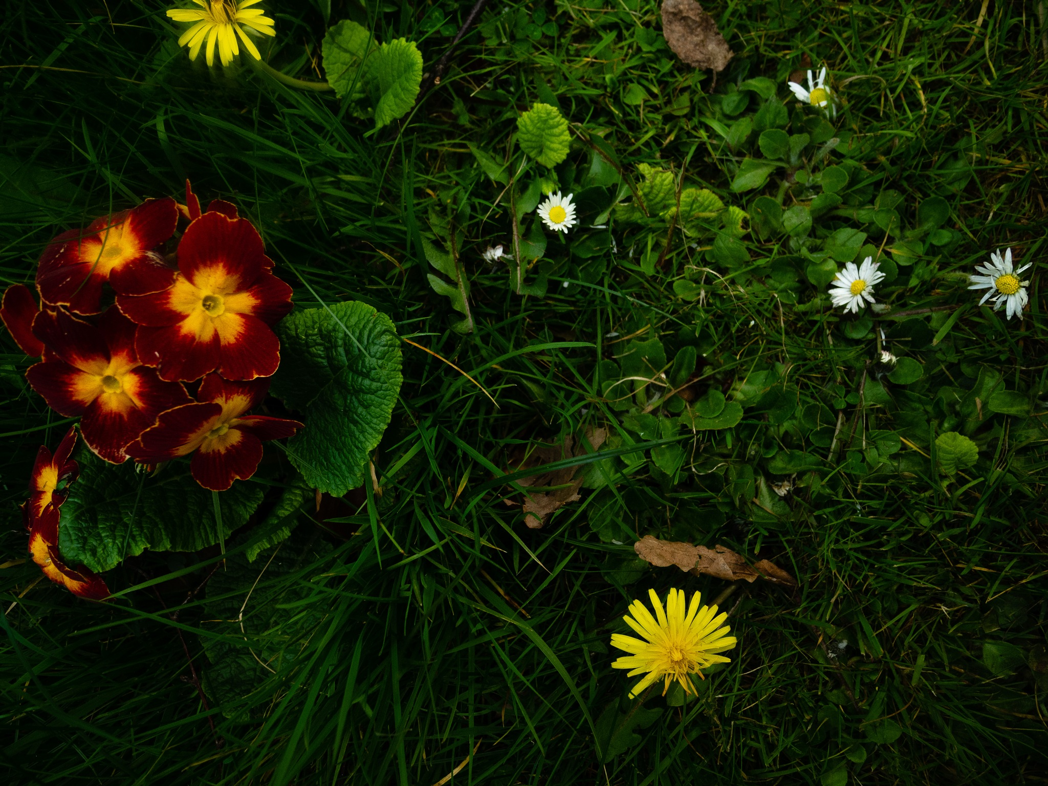 grass and flowers by Amelia Rouse