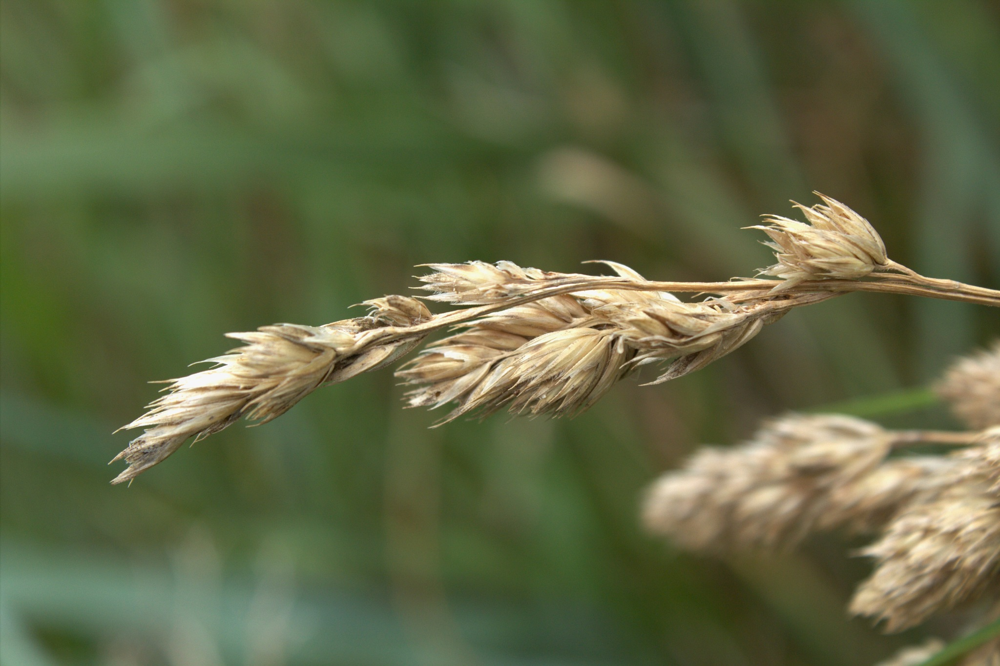 Grasses by Rich66