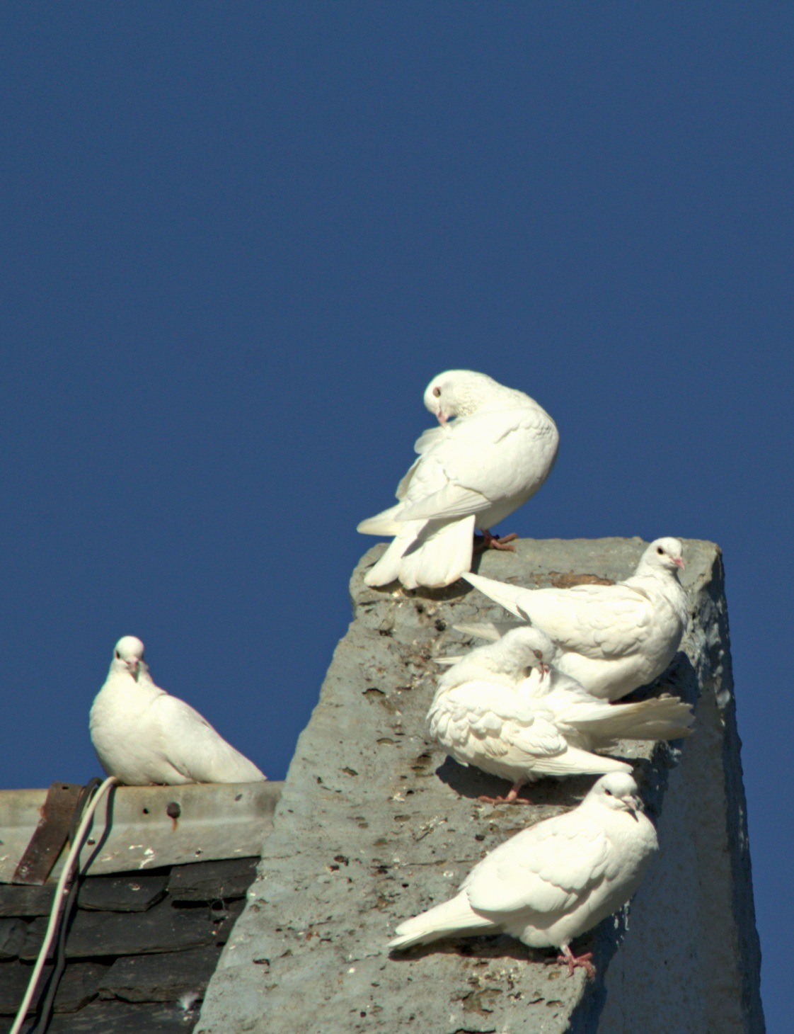 Doves by Rich66