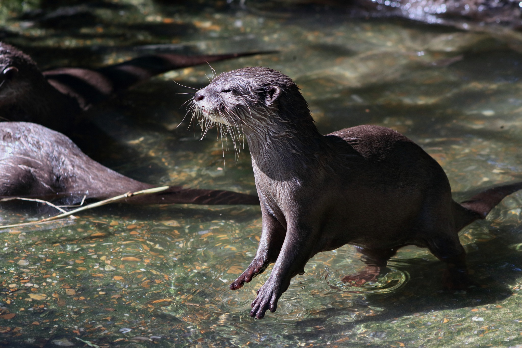 otter by Rich66