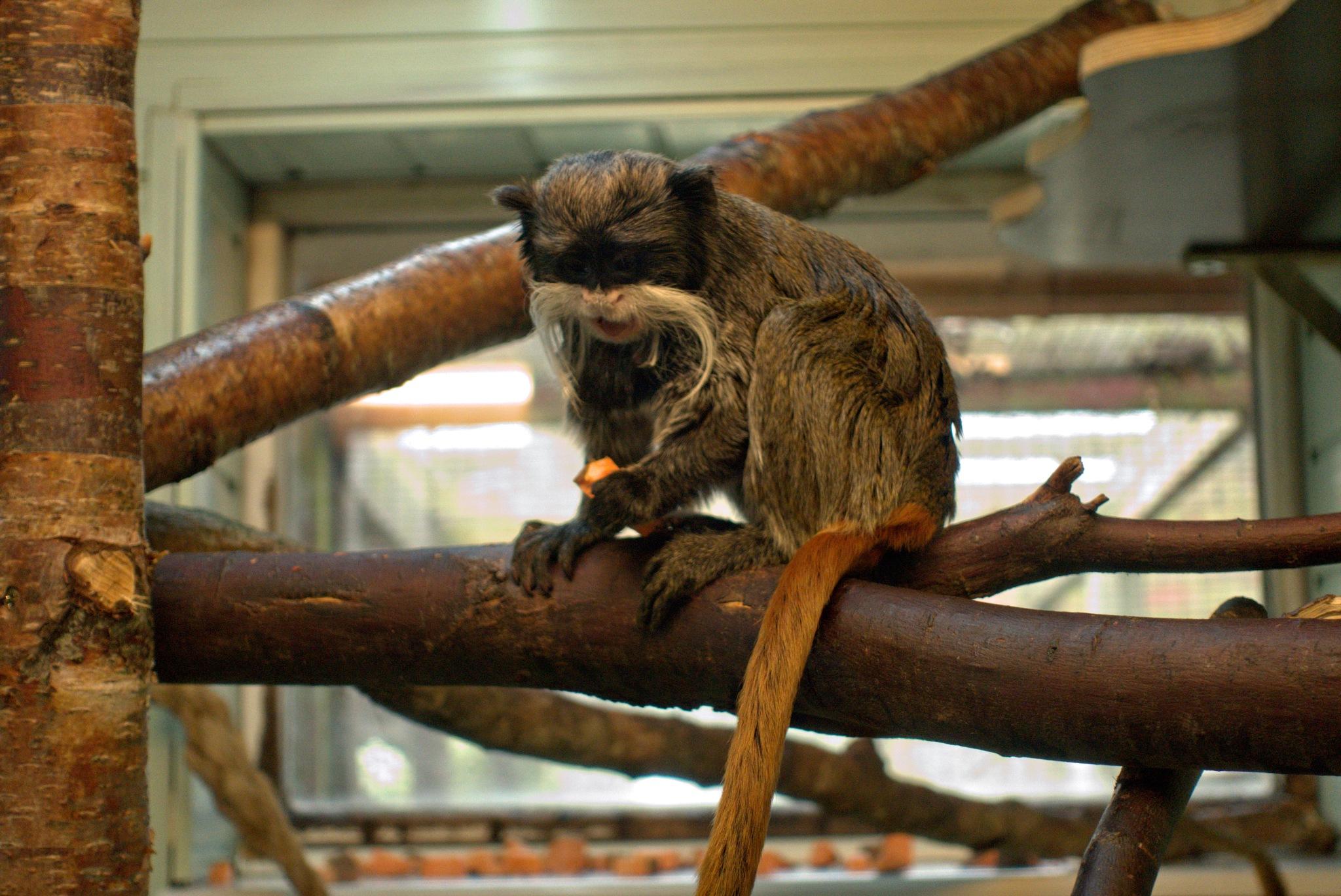 Little Monkey by Rich66