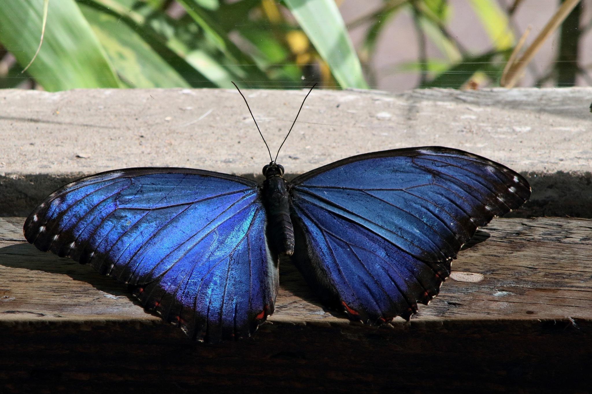 Butterfly by Rich66