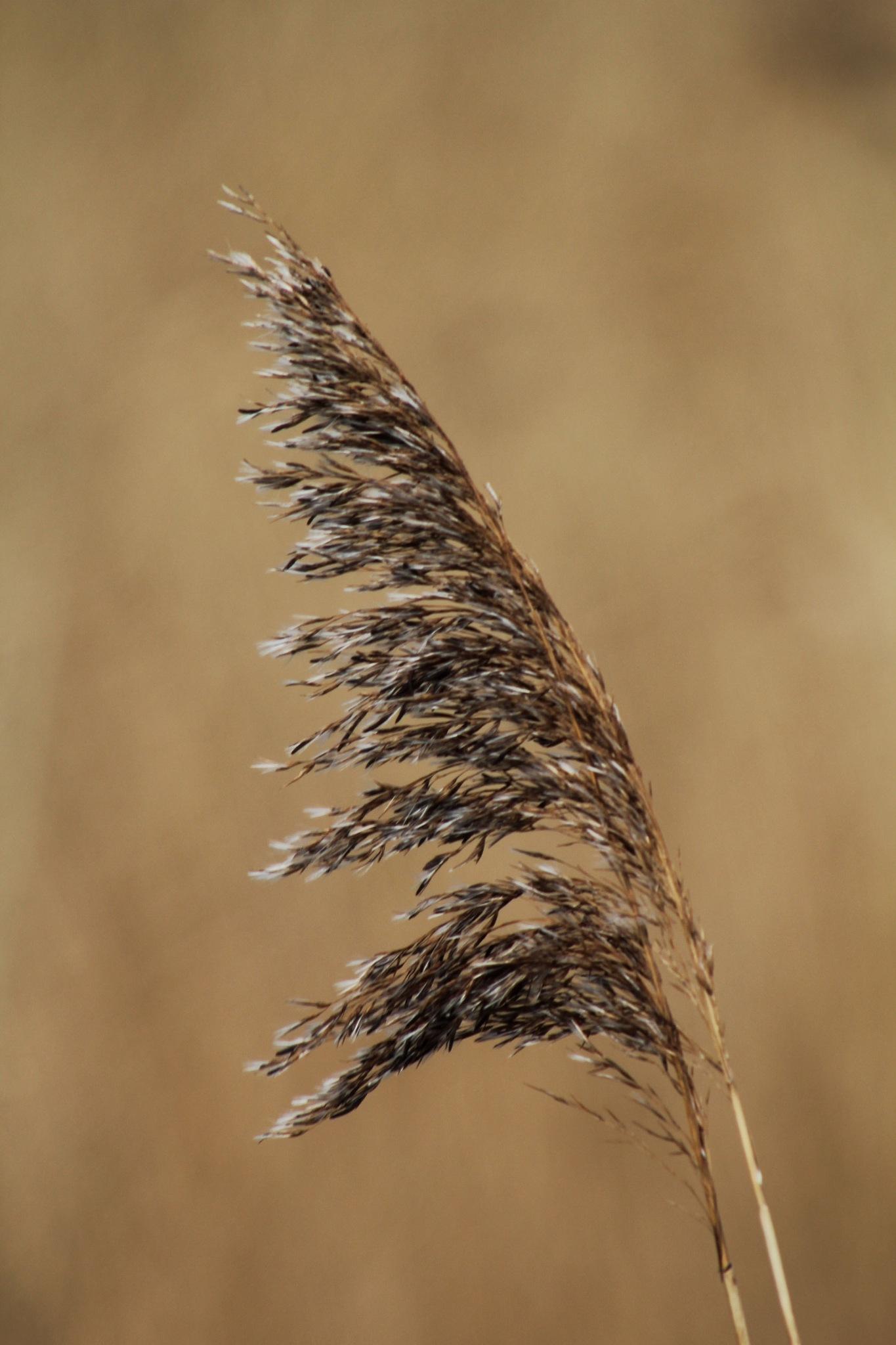 Grass Head by Rich66