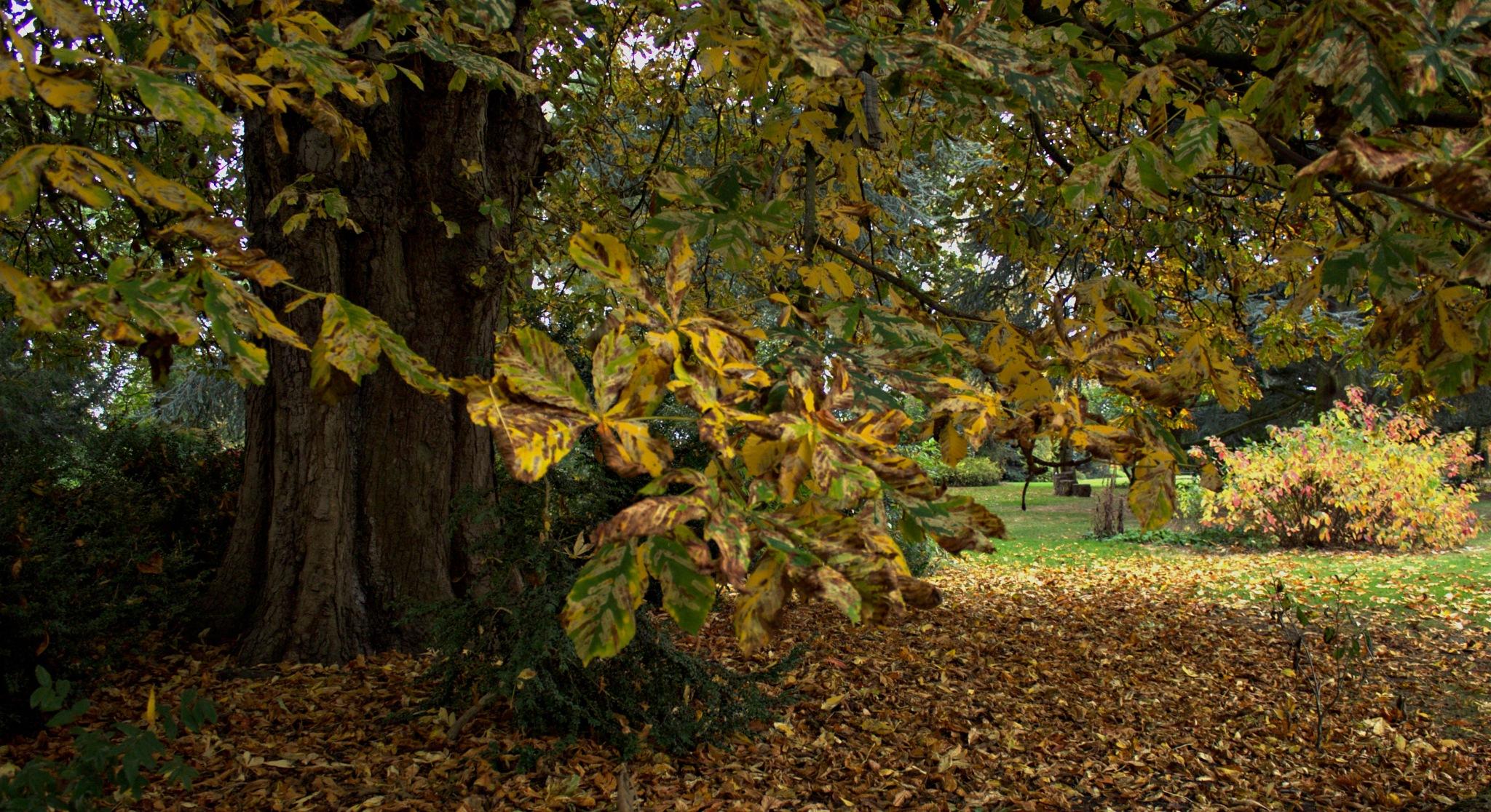 Autumn Park by Rich66
