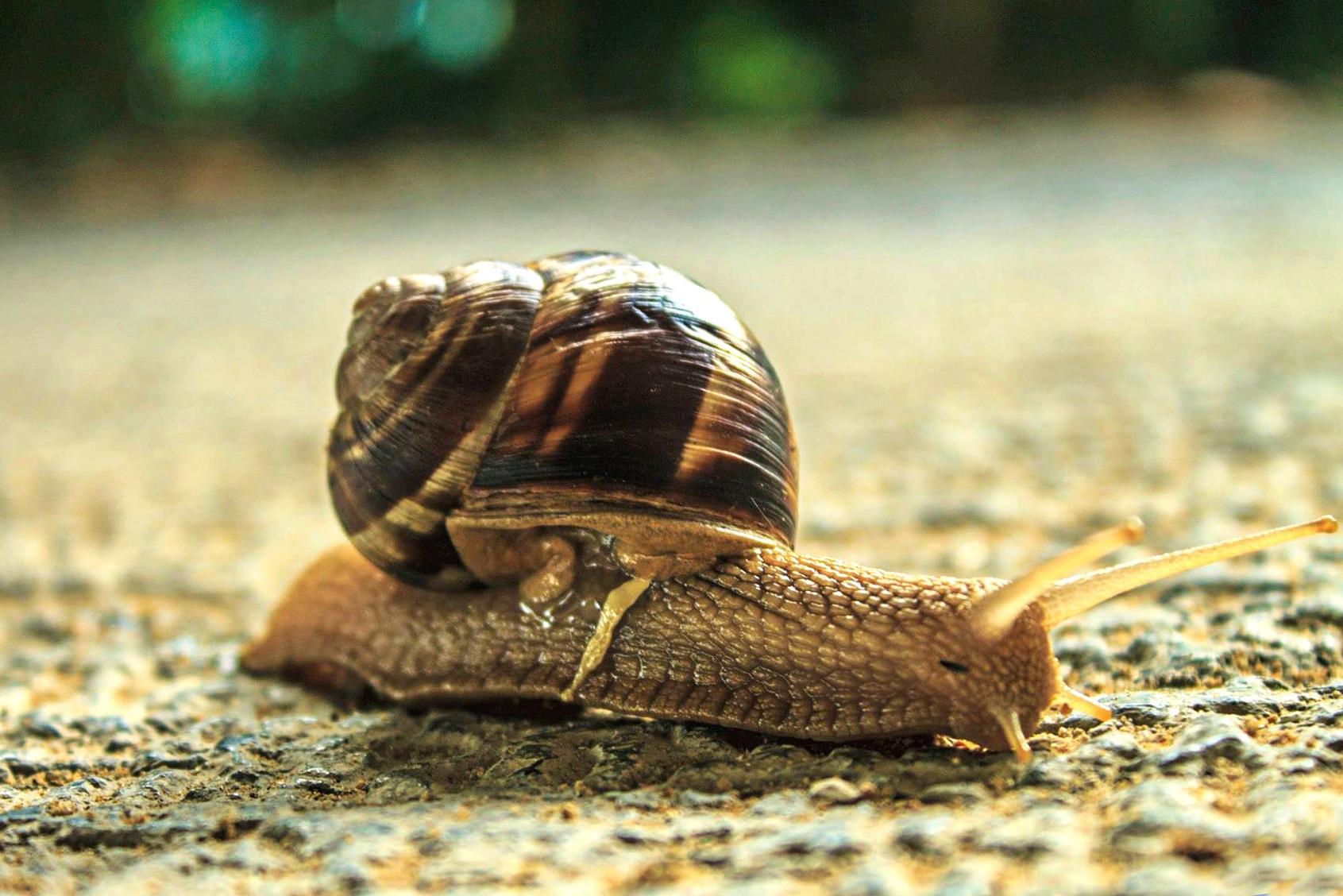Snail by sbolkan