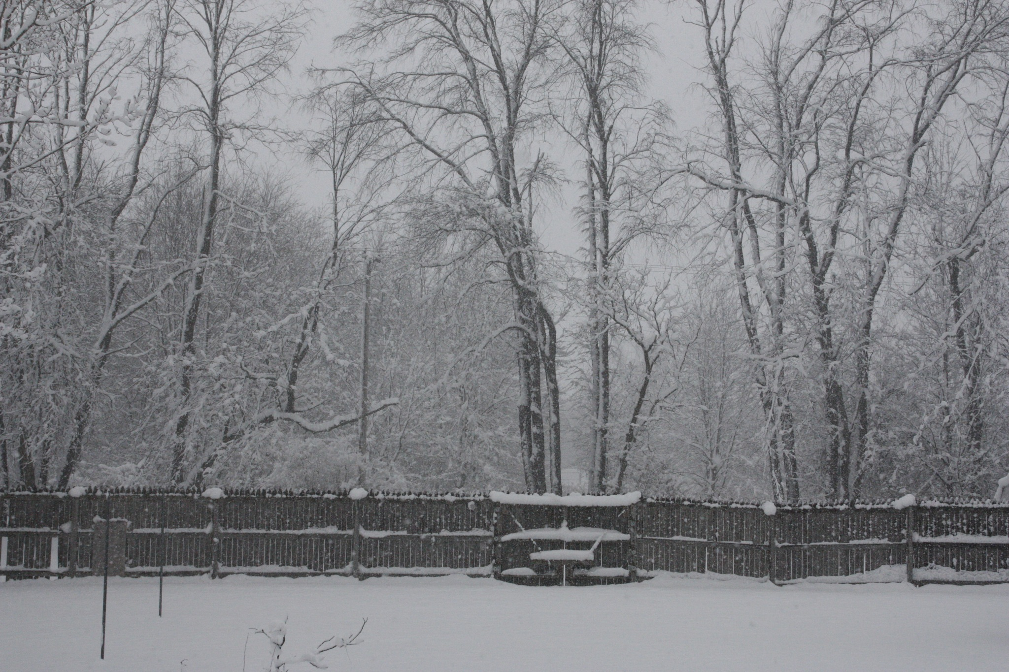 Winter in Michigan by dawnarie61