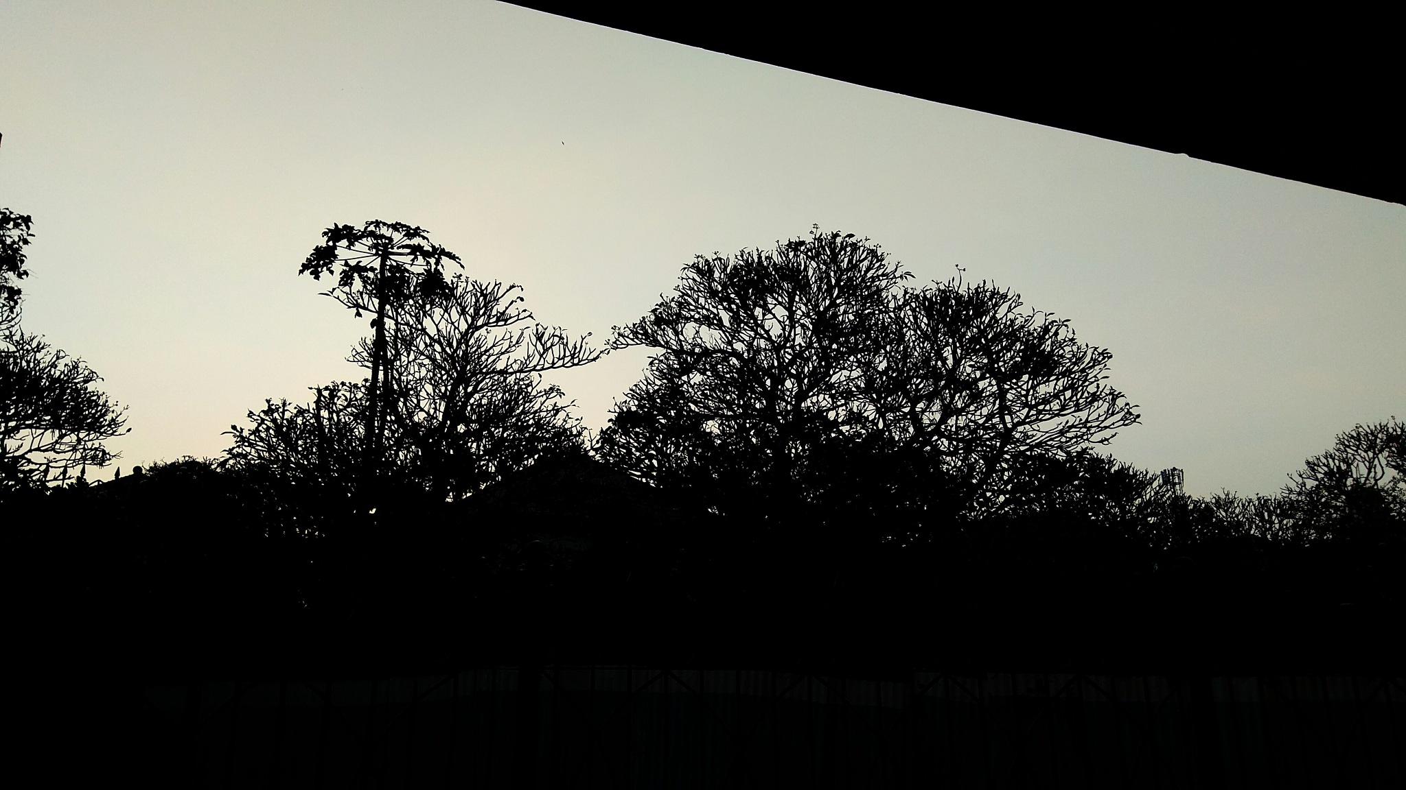 Siluet Pohon  by Sang²