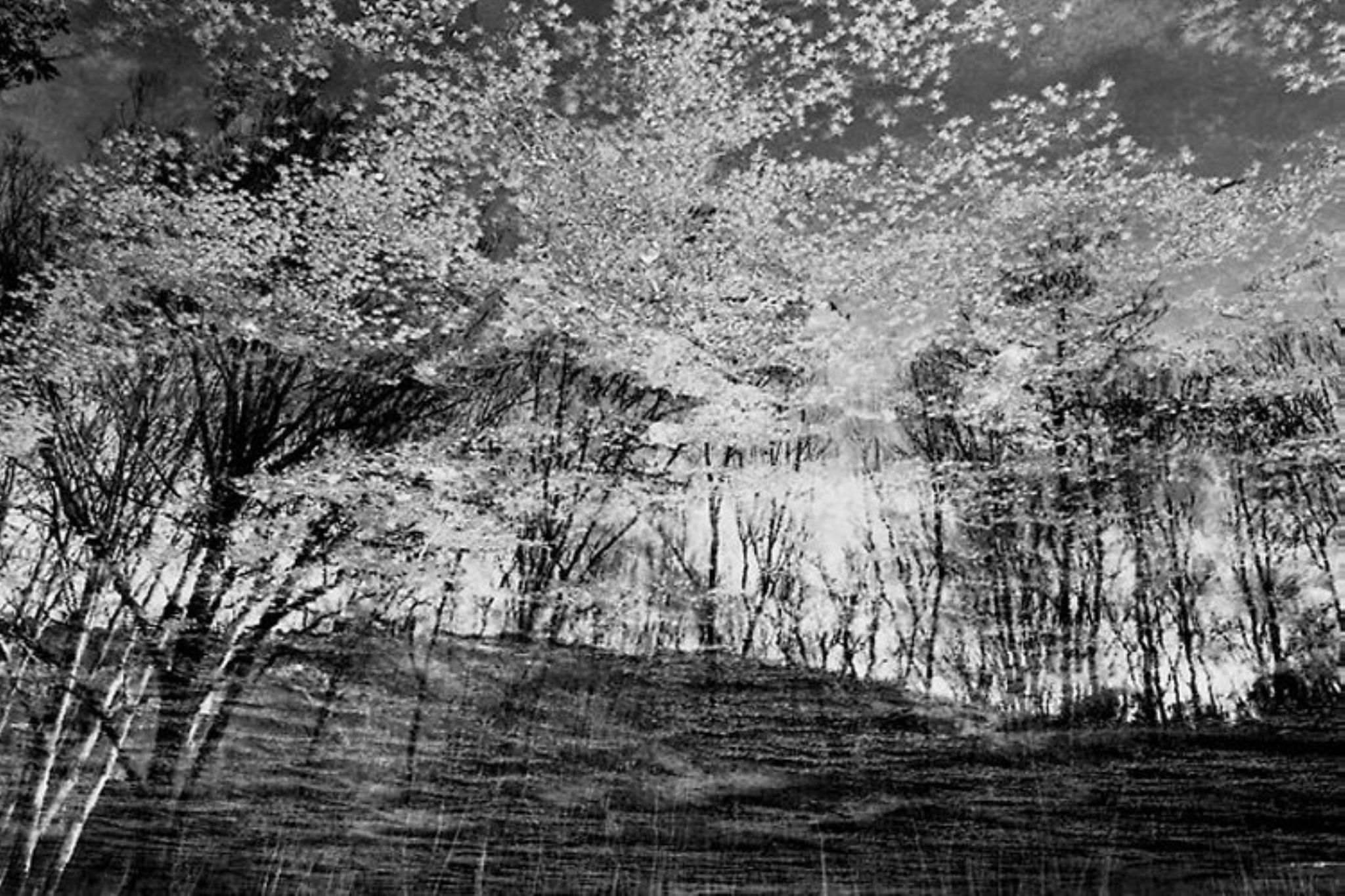 reflection by Philippe Berthier