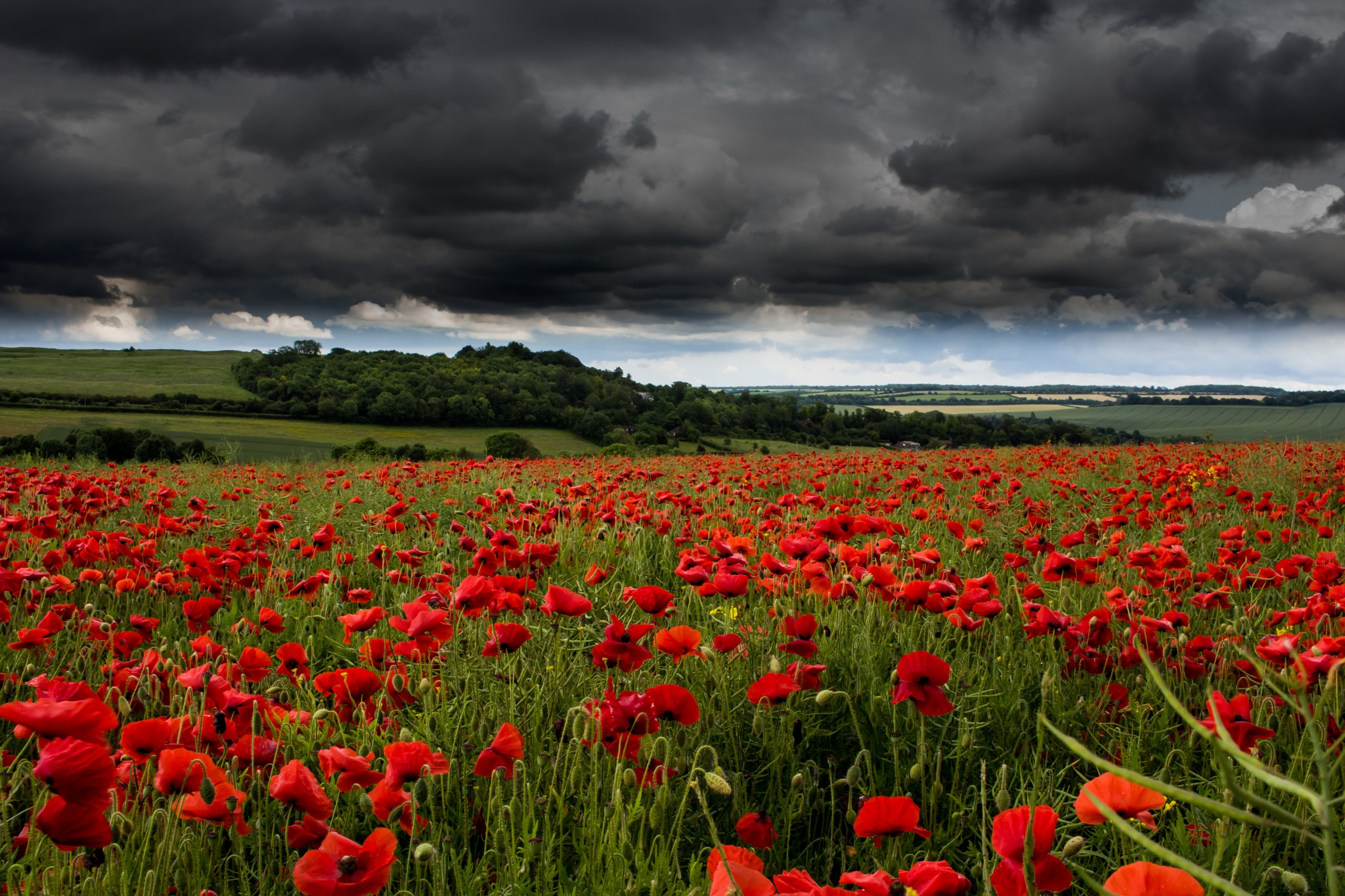 The Poppy Fields by Photographer Gino Cinganelli