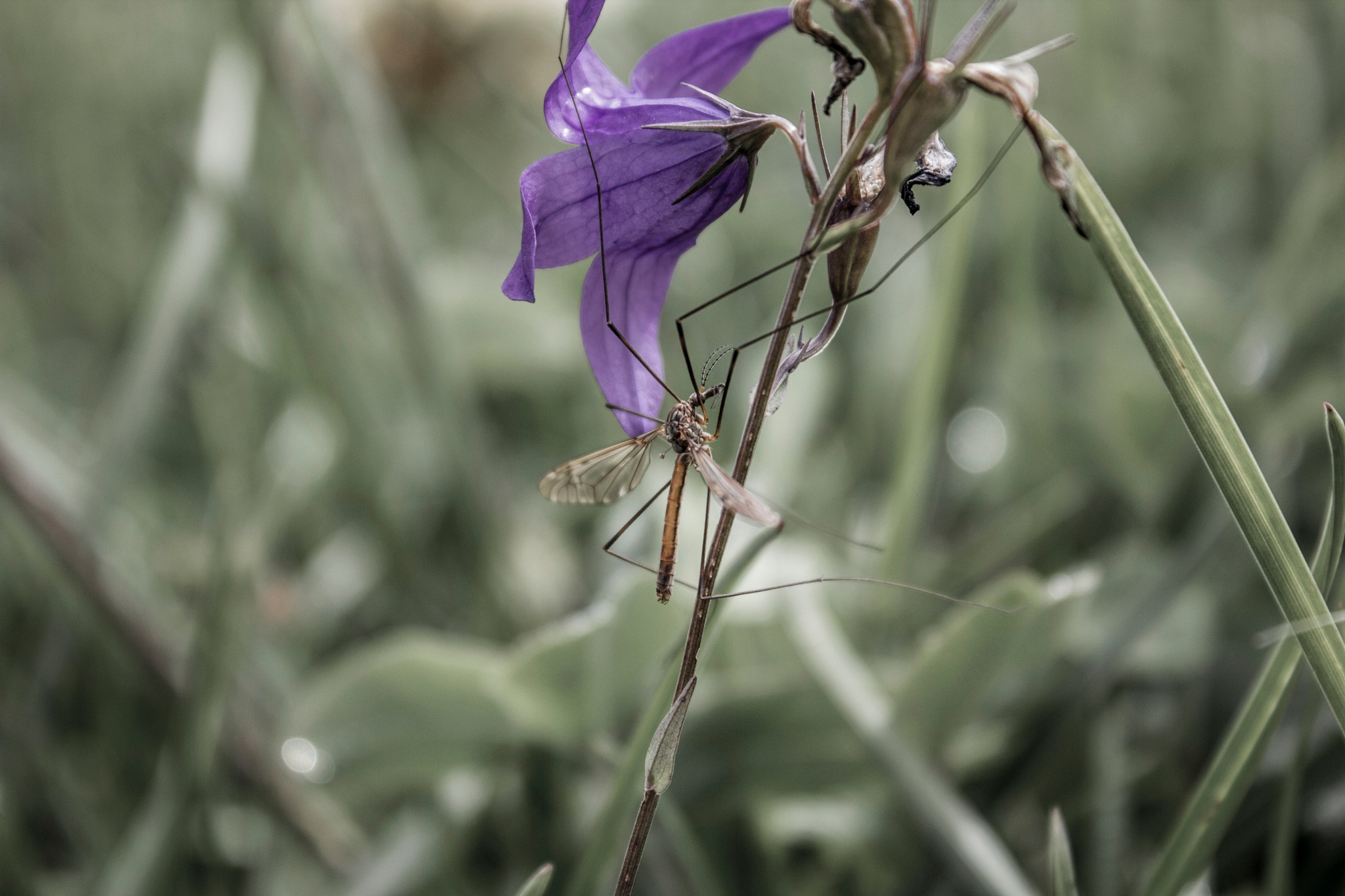 Çiçek ve Böcek by Bülent Aydın