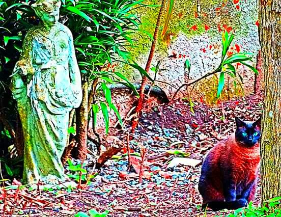 O gato e a estátua  by Emerson Mazza