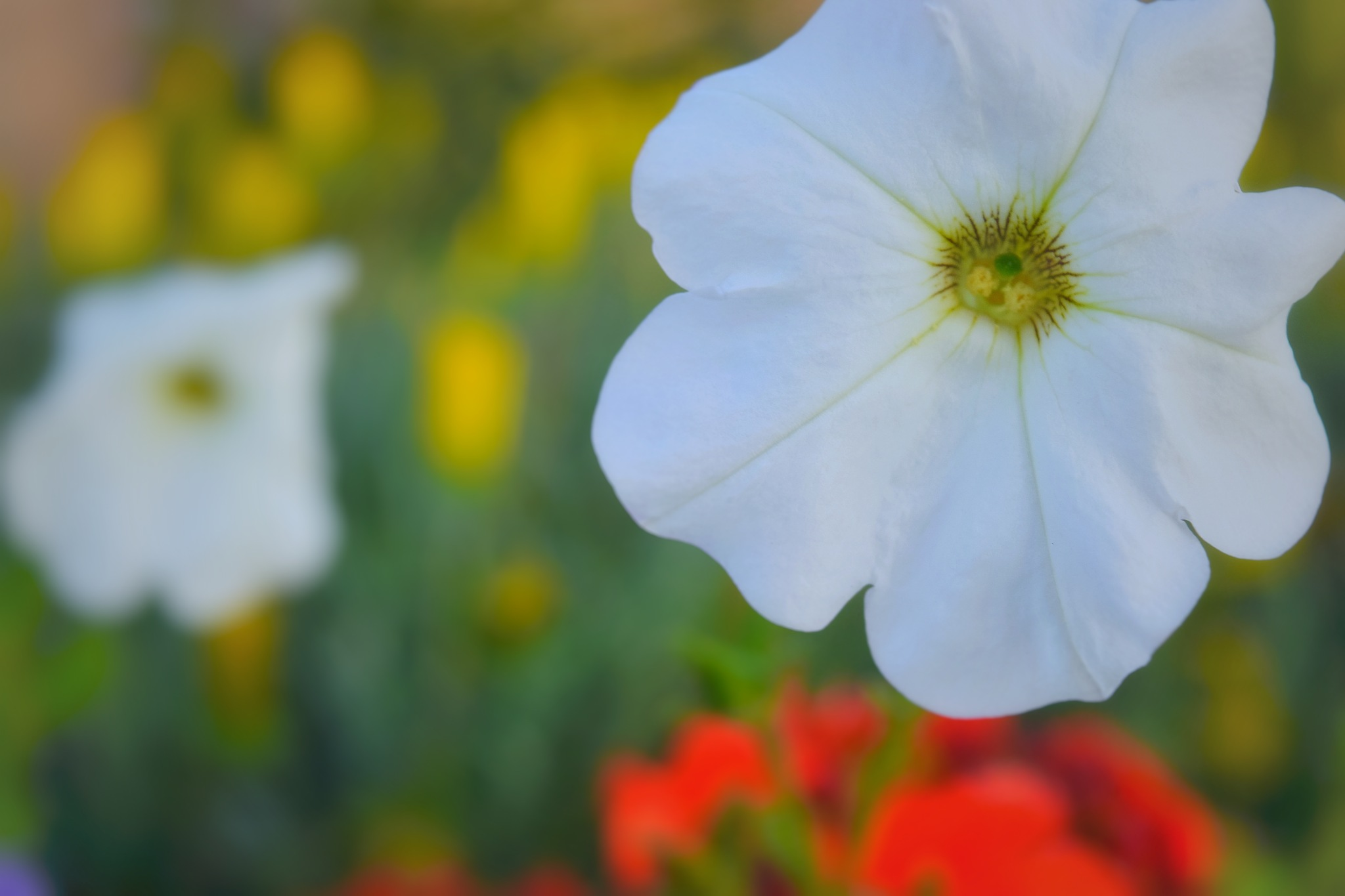The White Flower by Mohamed Maged Mohamed Fathy