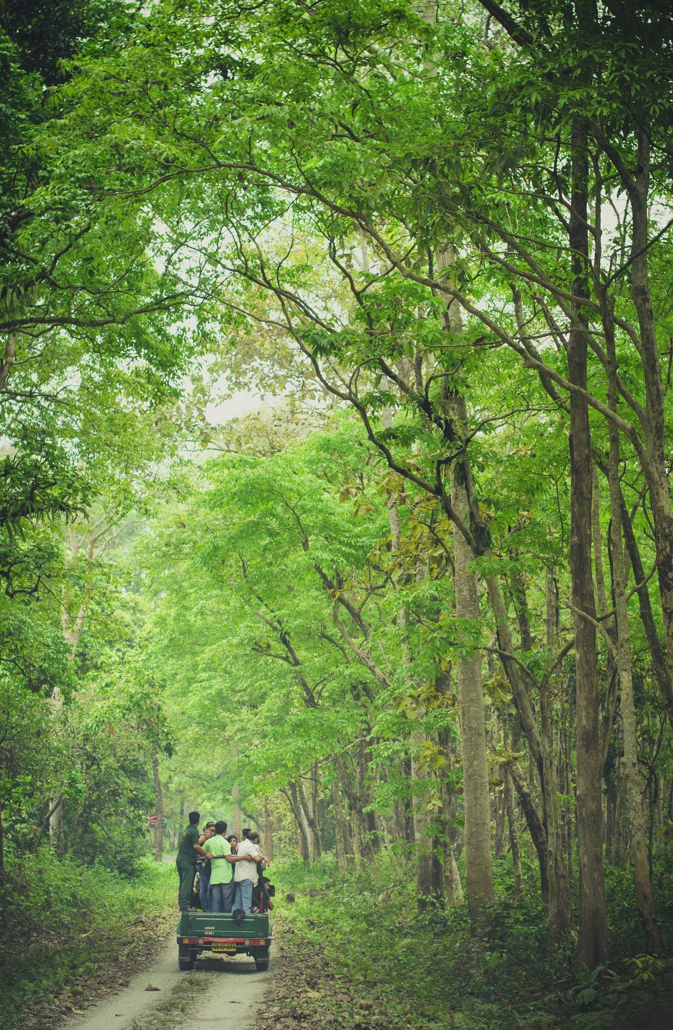 Jungle safari by bappadityadasgupta