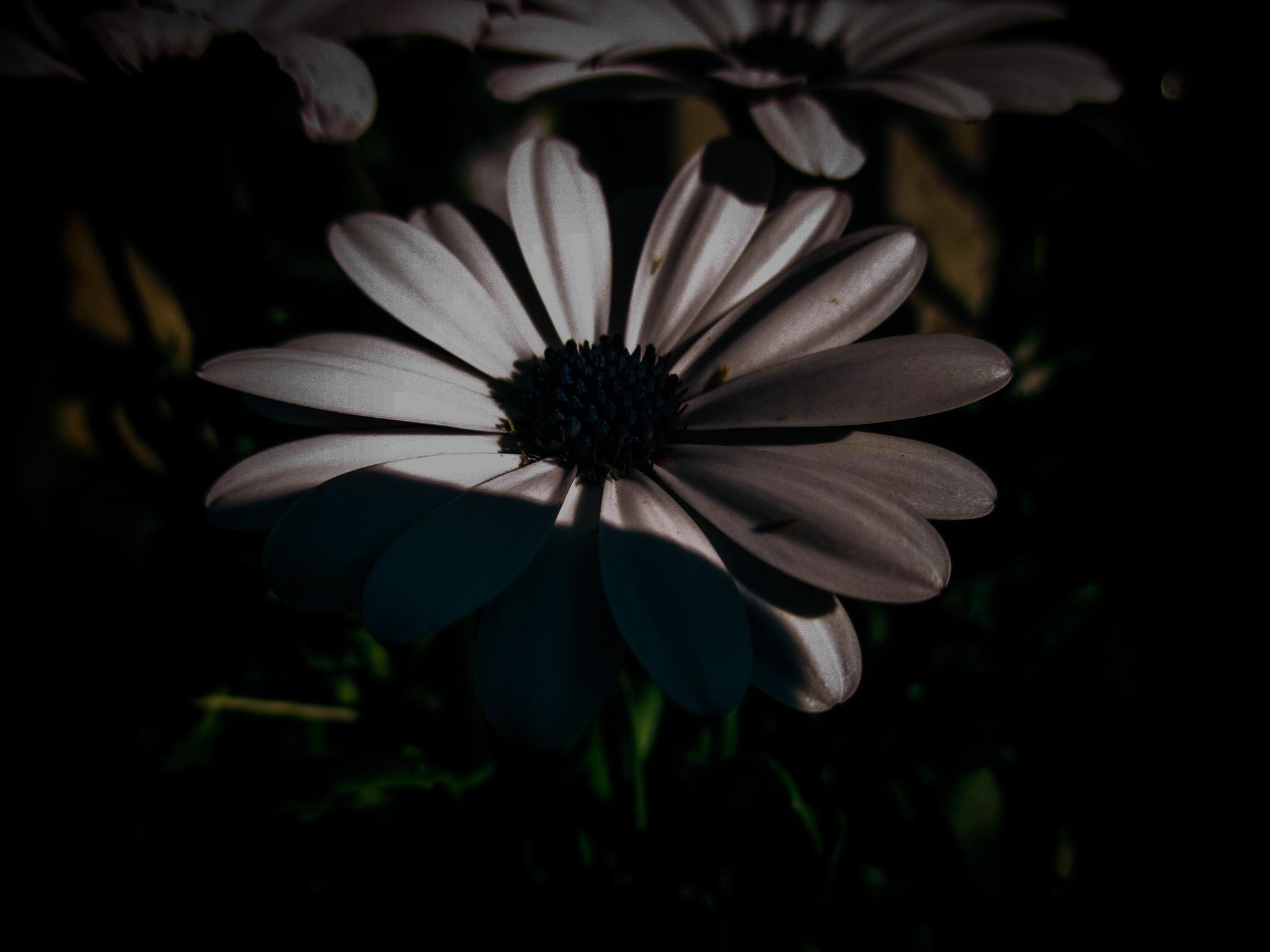 Low Light by Kristen Fisher