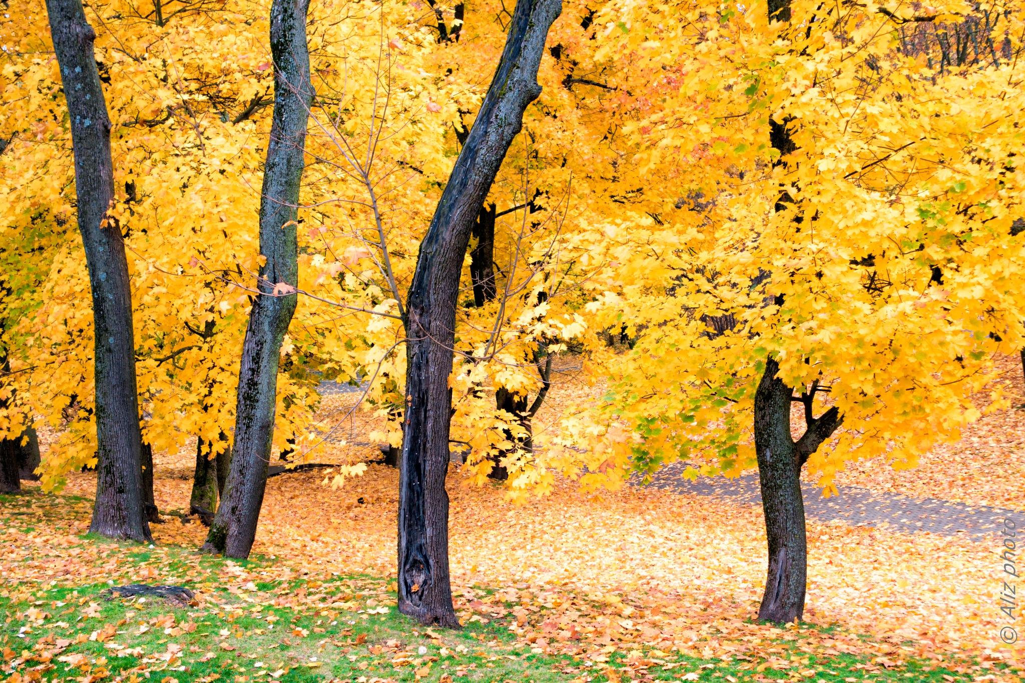 Autumn 2017 by Aleksandras Zvirzdinas