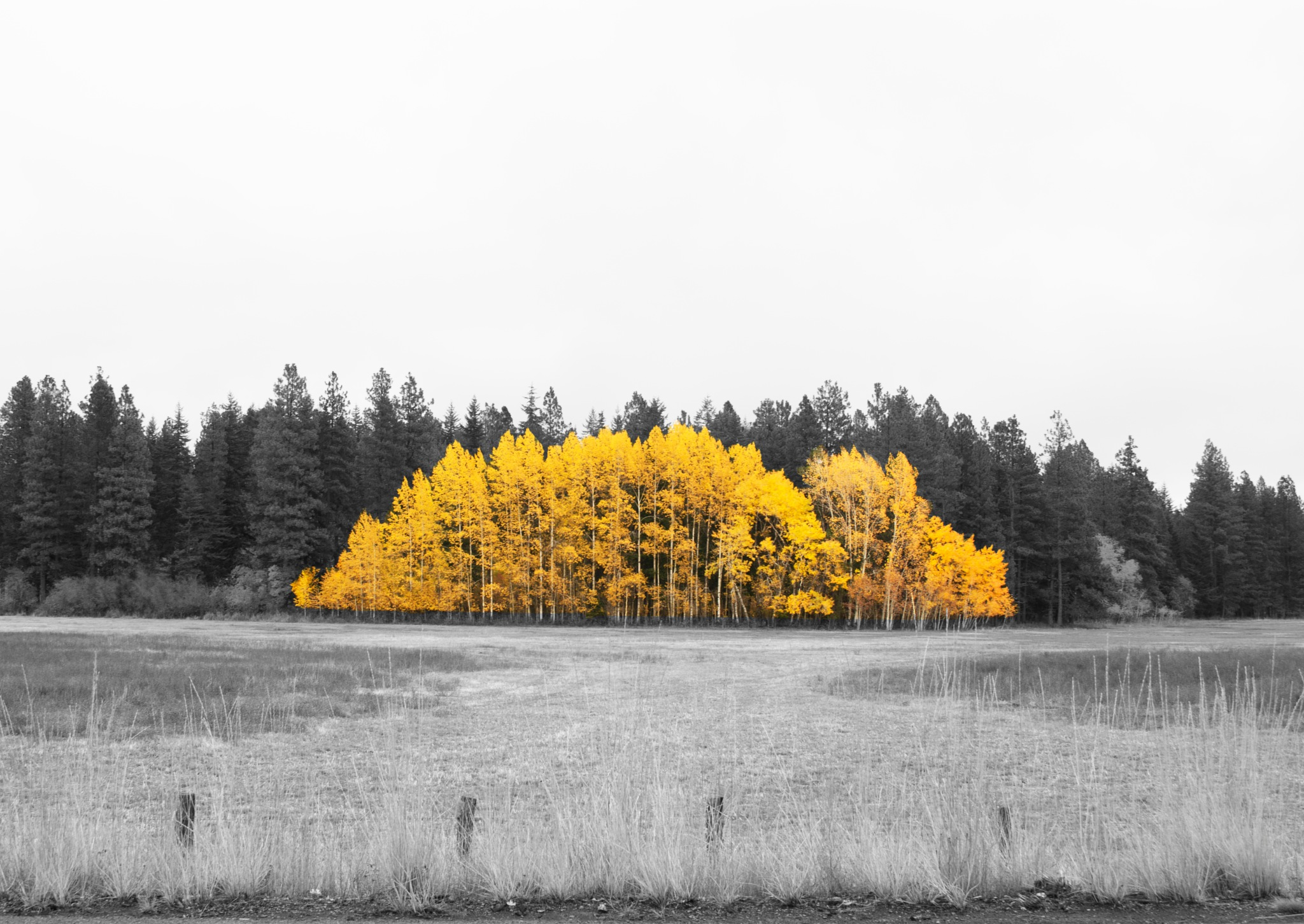 Bright Trees by geniusminds