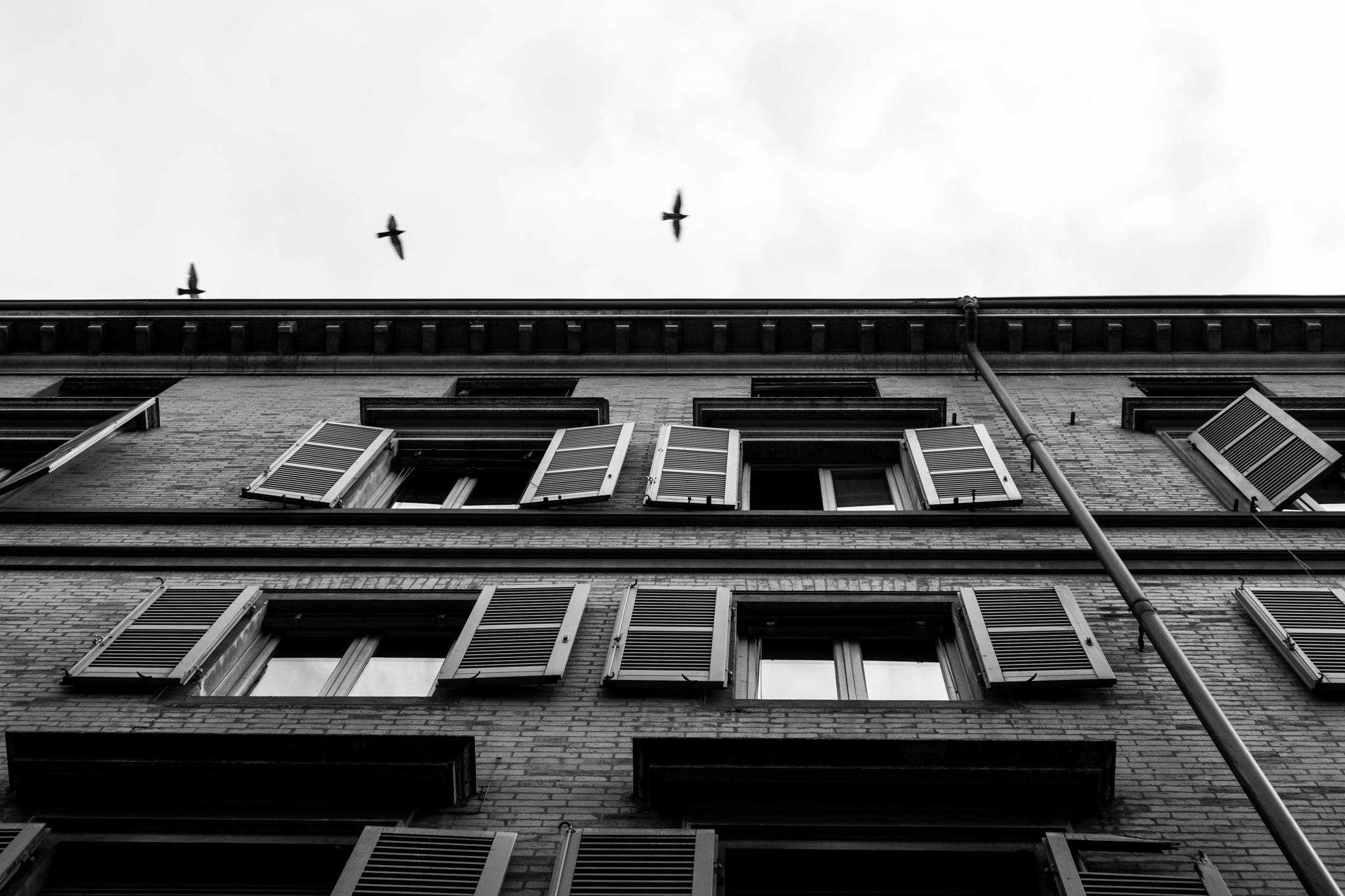windows by geniusminds
