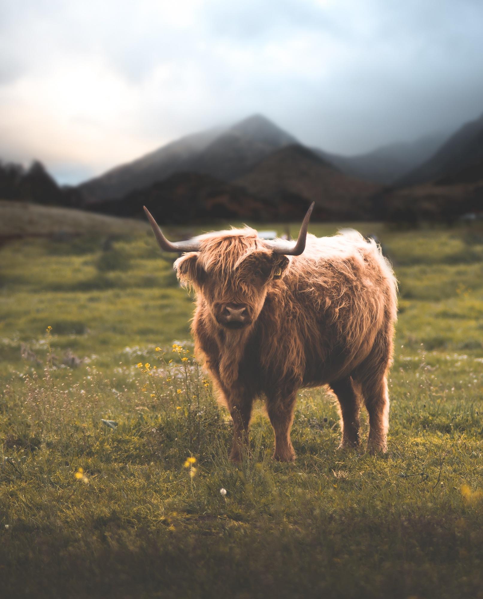 scootland by nacho_zaitsev