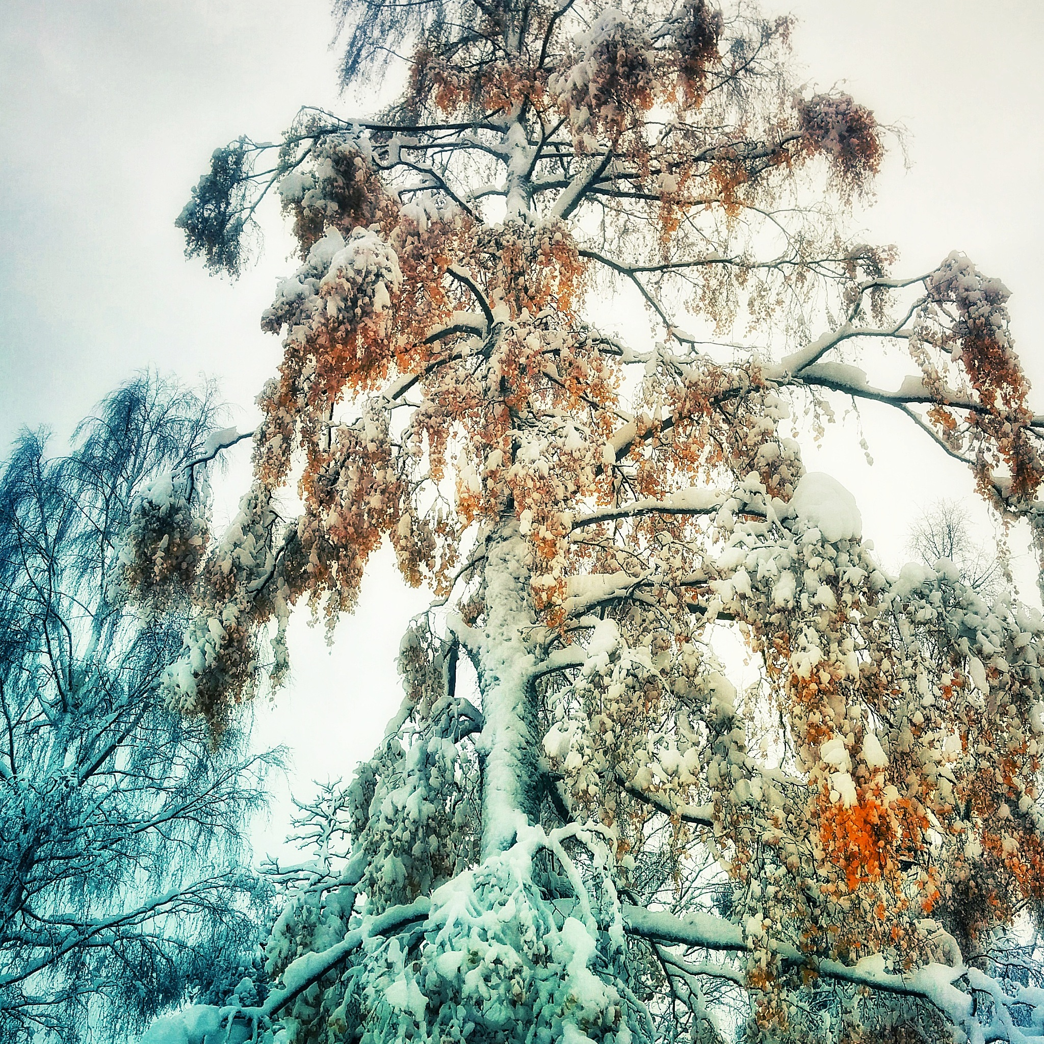 Winter is coming! by ADifferentTrail