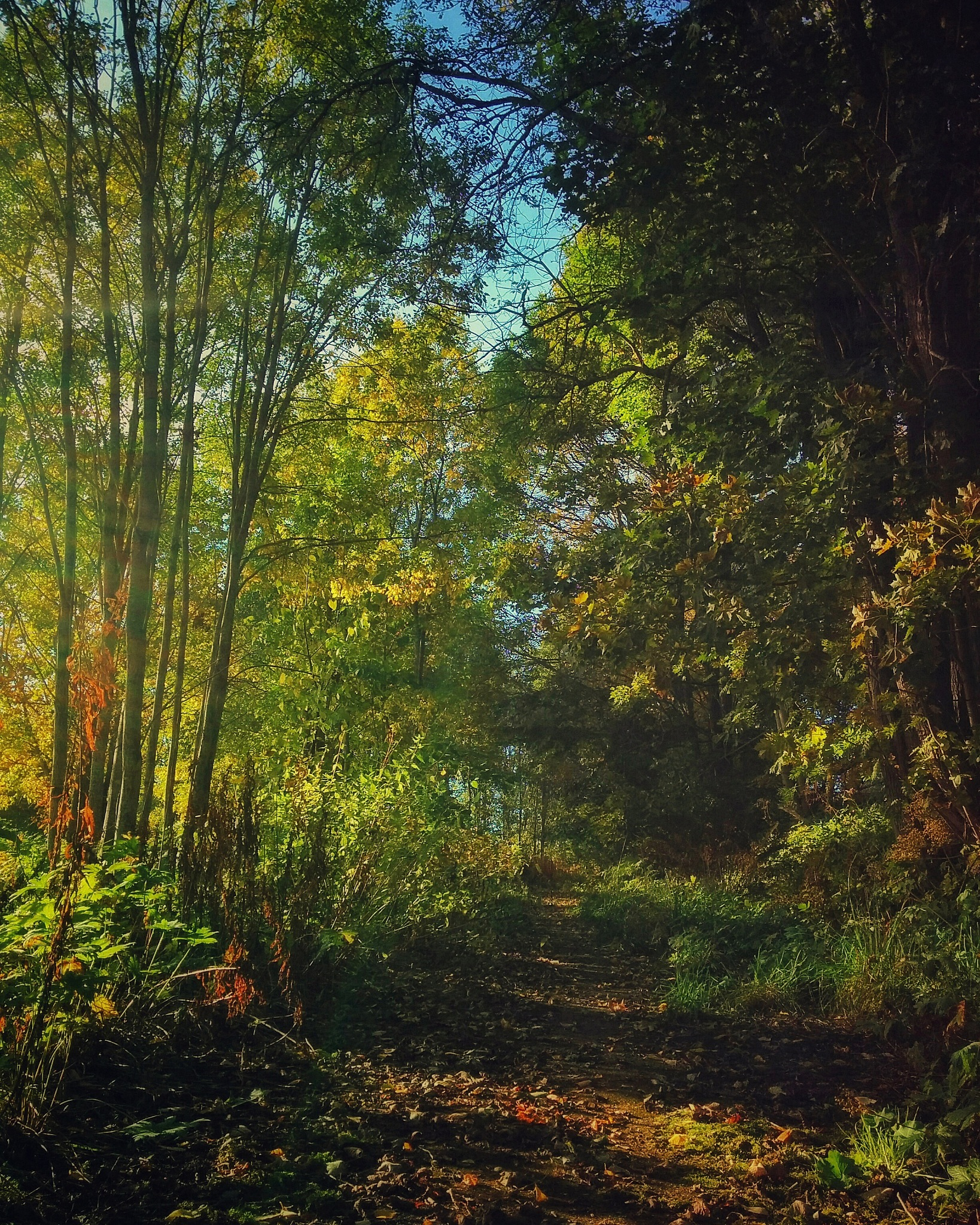 The Path by ADifferentTrail