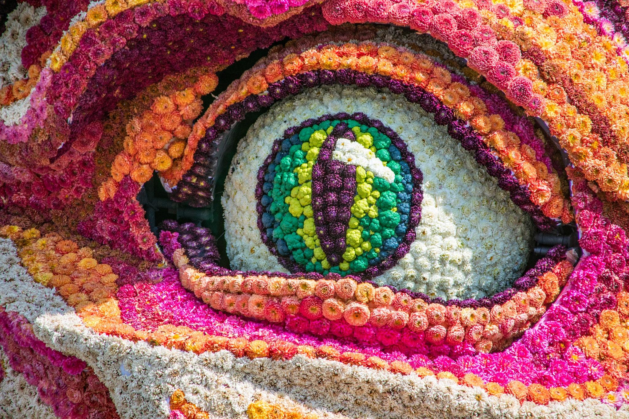 Flower Parade Zundert 2019 - ARGUS_detail by HaWaFoTo