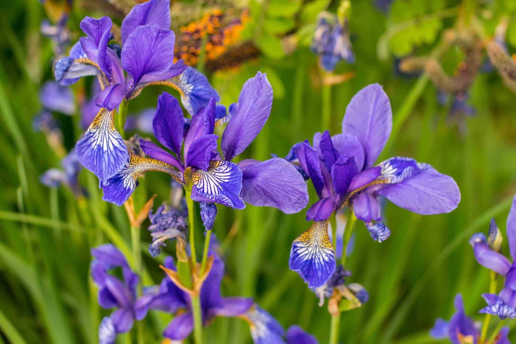Flowers_II by HaWaFoTo