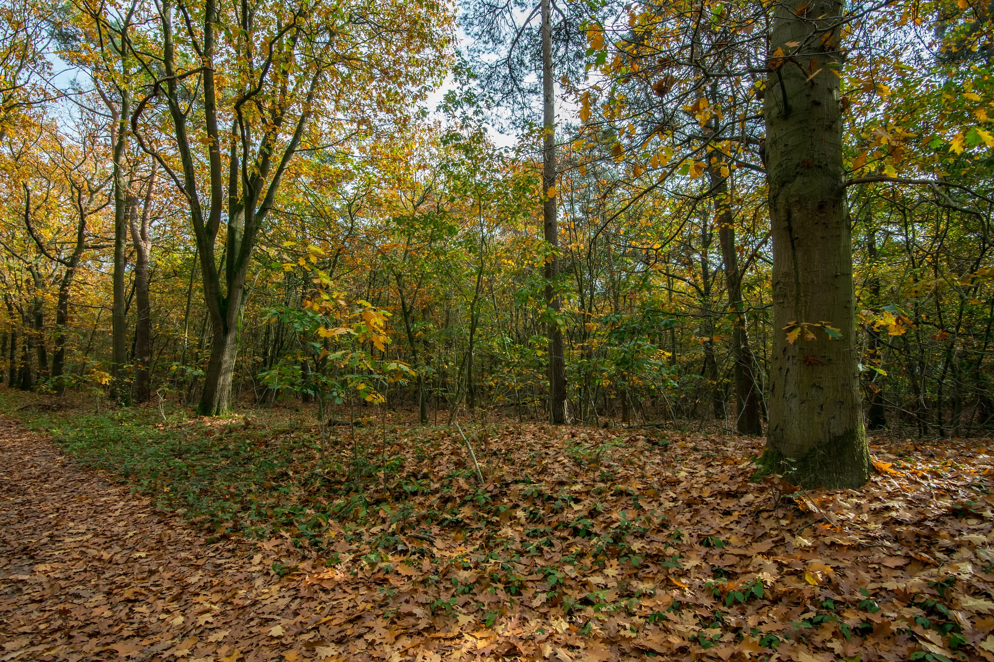 Autumn Colours_III by HaWaFoTo